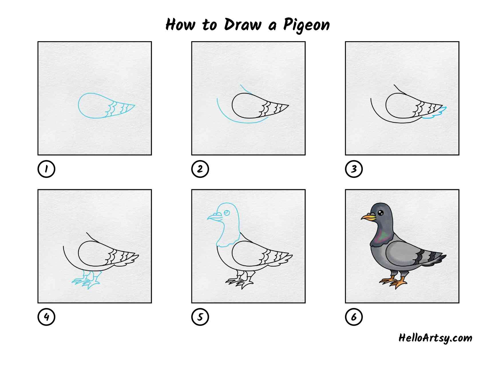 How To Draw A Pigeon: All Steps