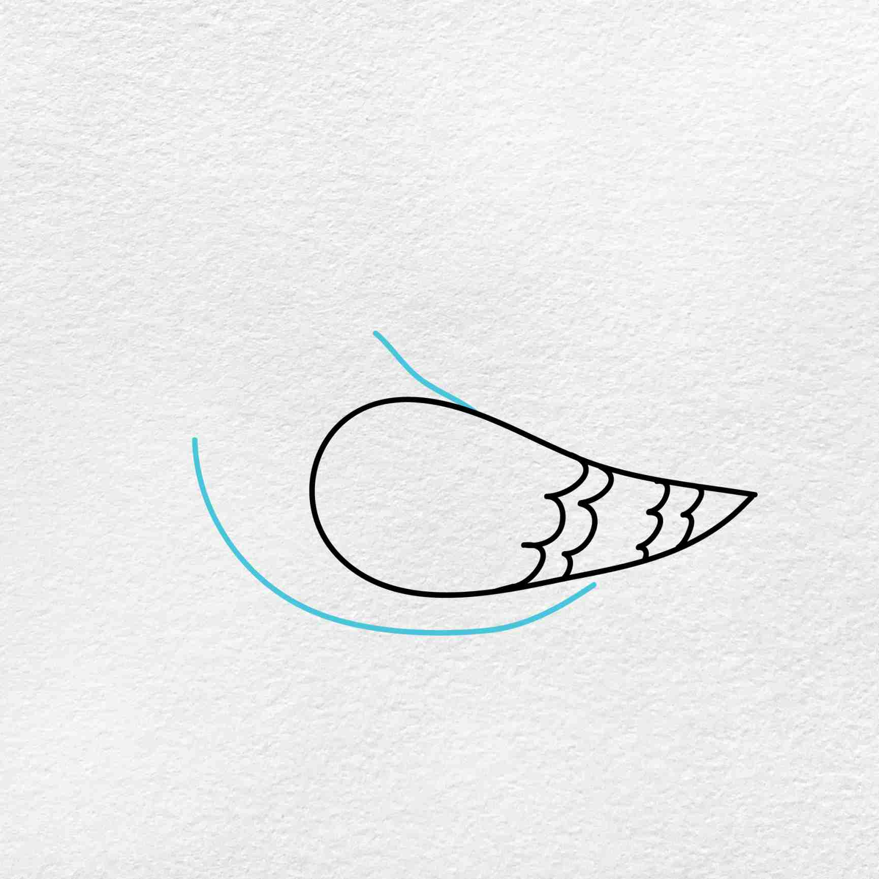 How To Draw A Pigeon: Step 2