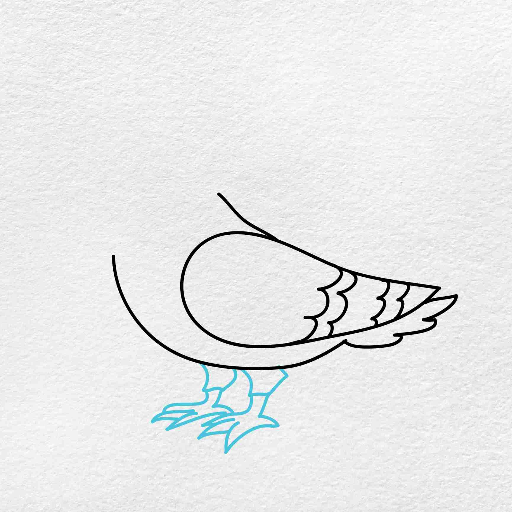 How To Draw A Pigeon: Step 4