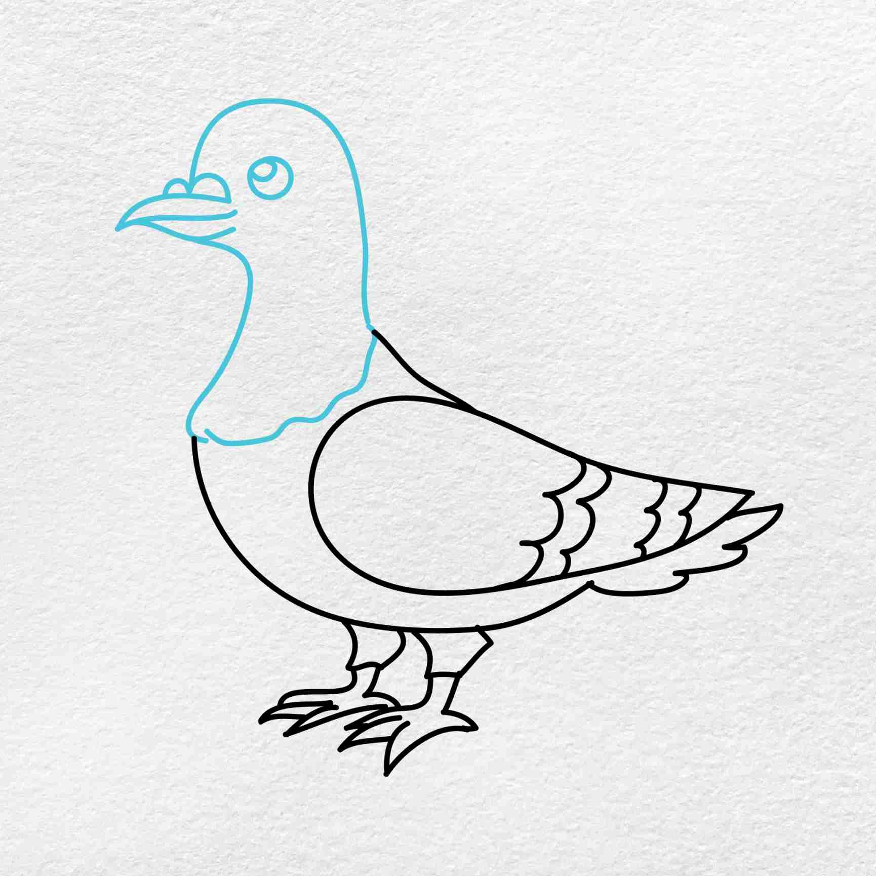 How To Draw A Pigeon: Step 5