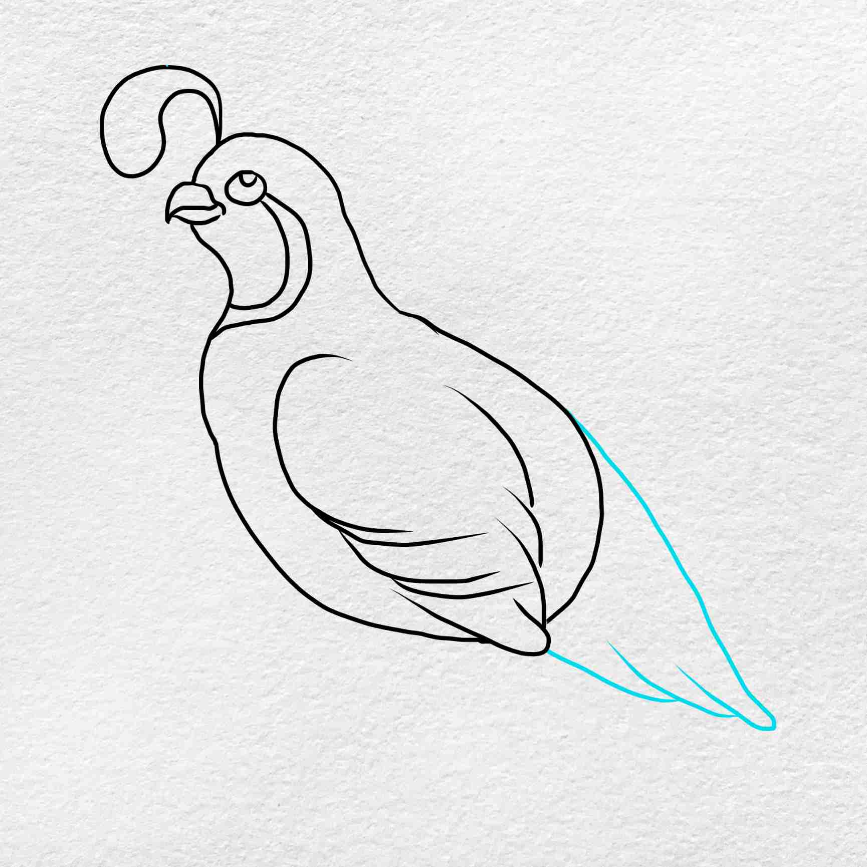 How To Draw A Quail: Step 4