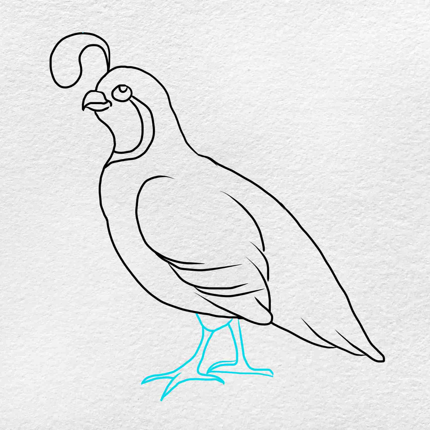 How To Draw A Quail: Step 5