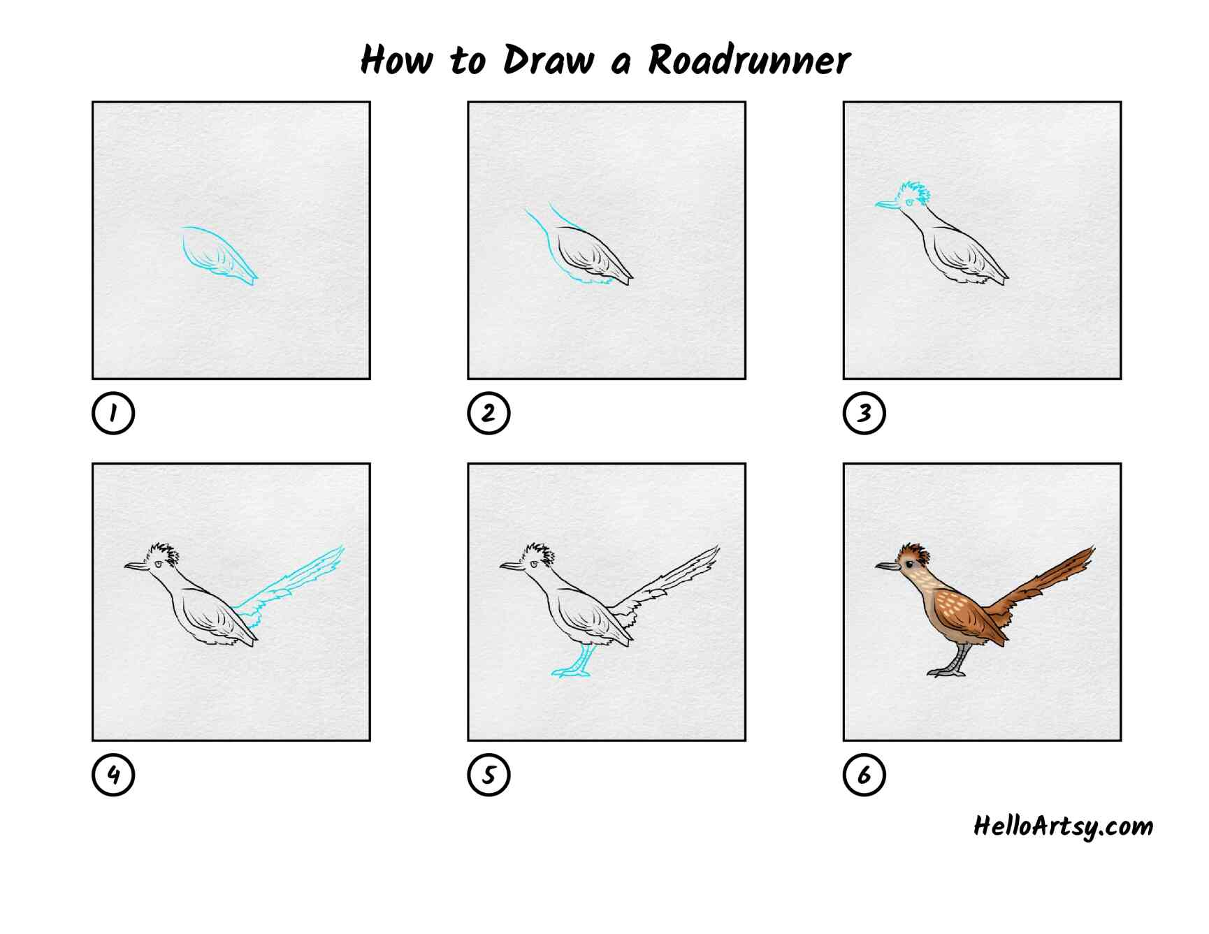 How To Draw A Roadrunner: All Steps