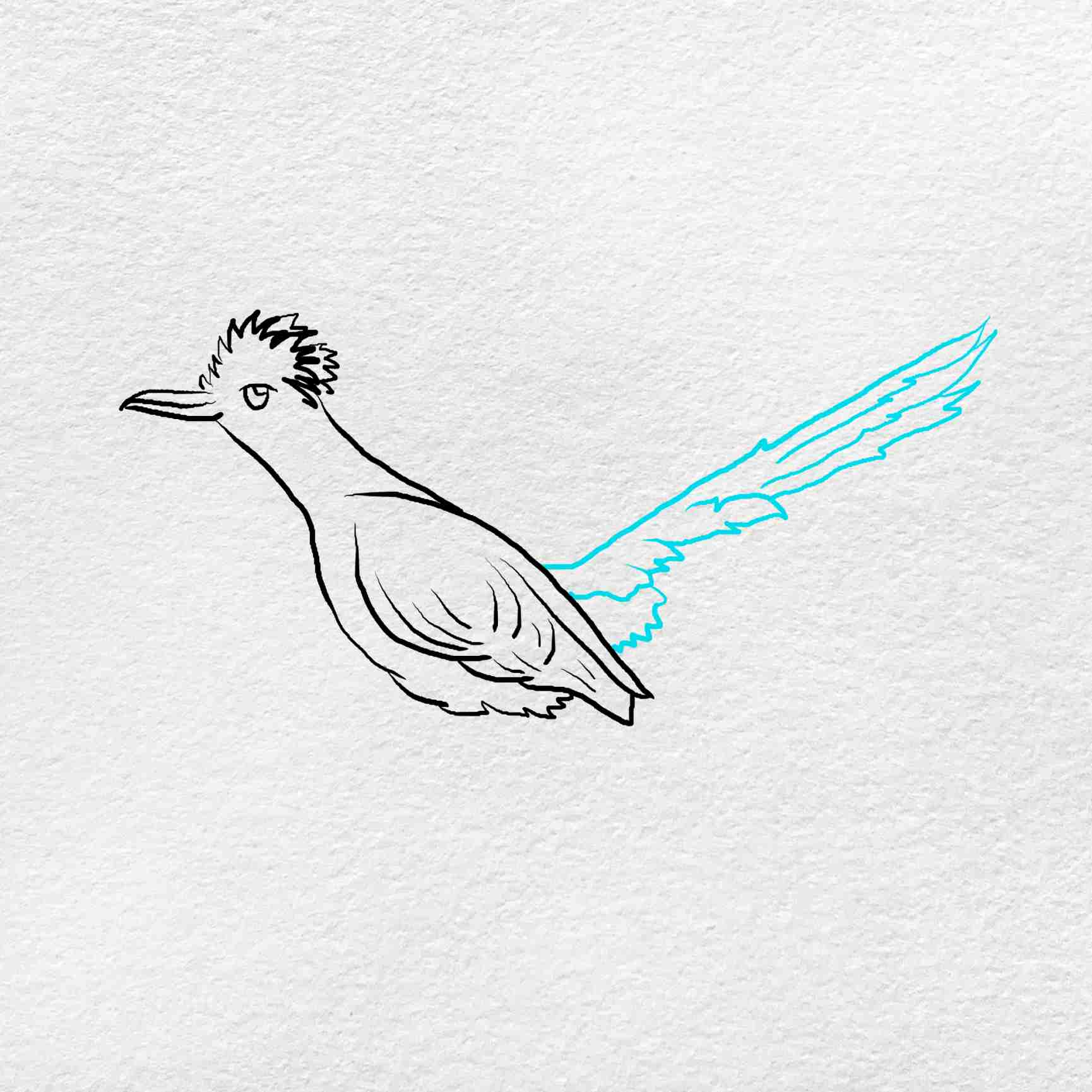 How To Draw A Roadrunner: Step 4