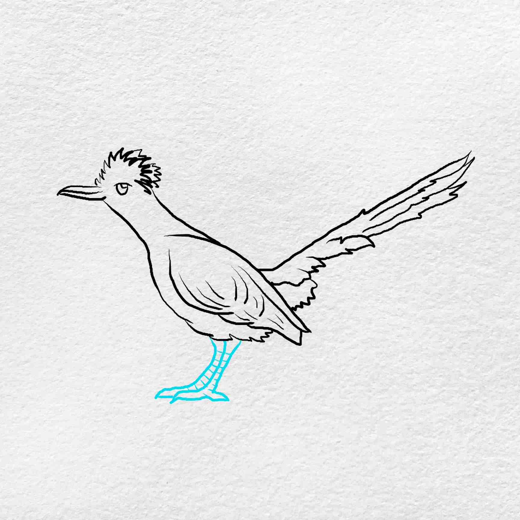 How To Draw A Roadrunner: Step 5