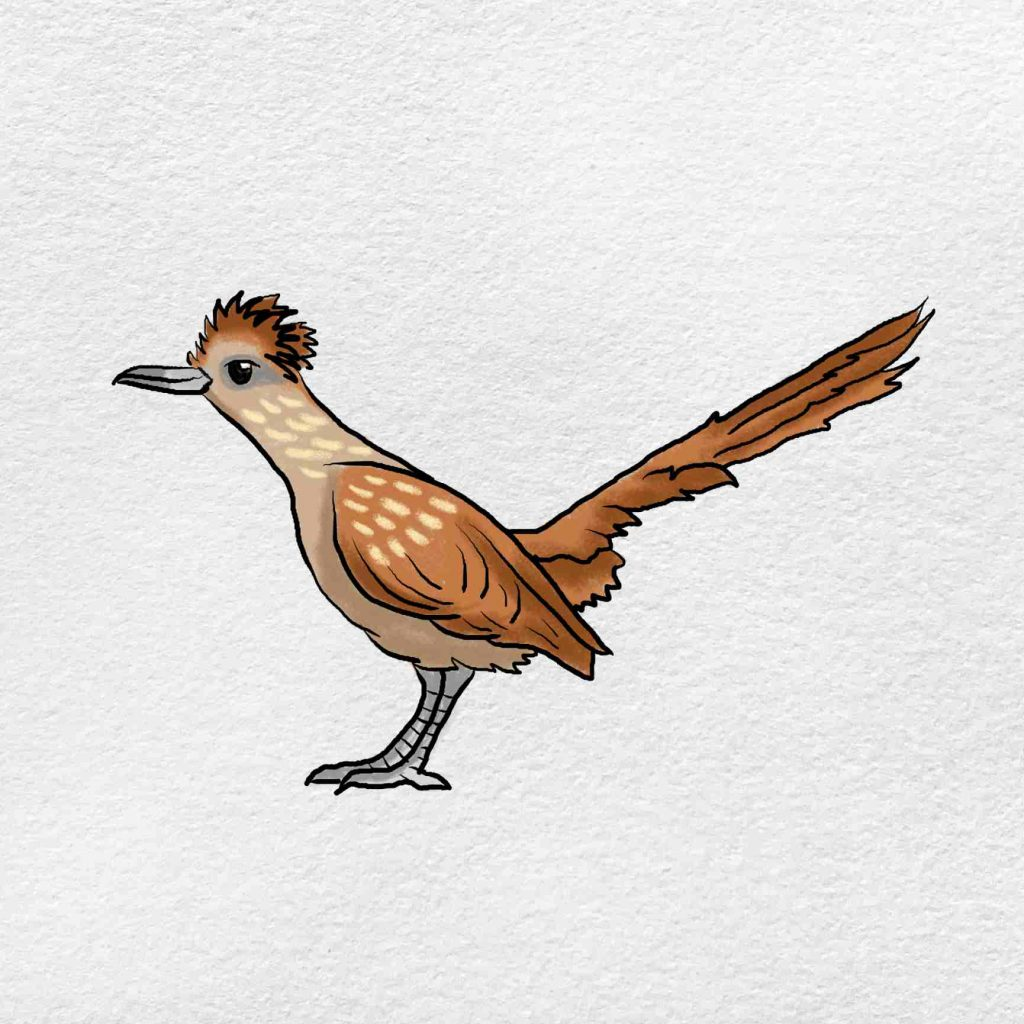 How To Draw A Roadrunner: Step 6