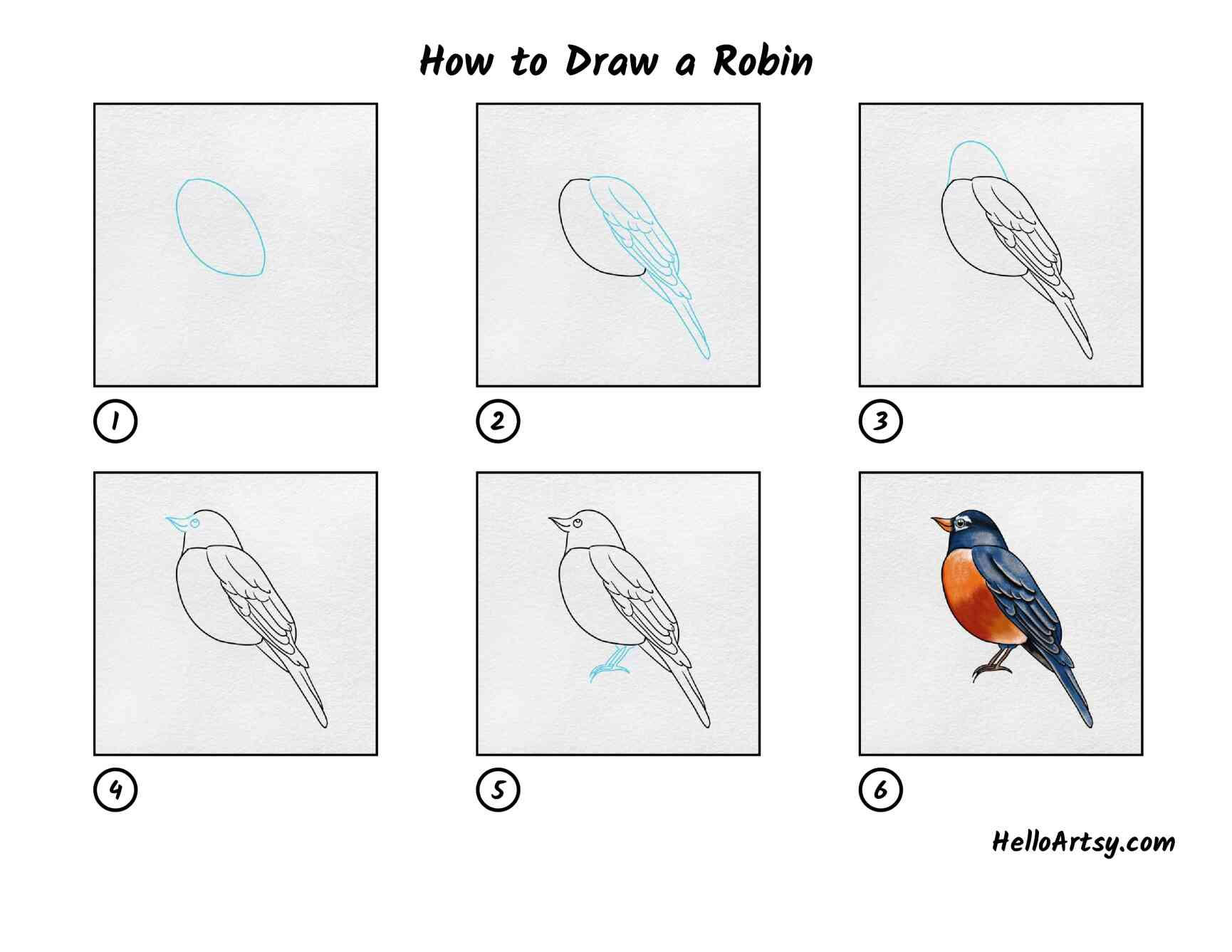 How To Draw A Robin: All Steps