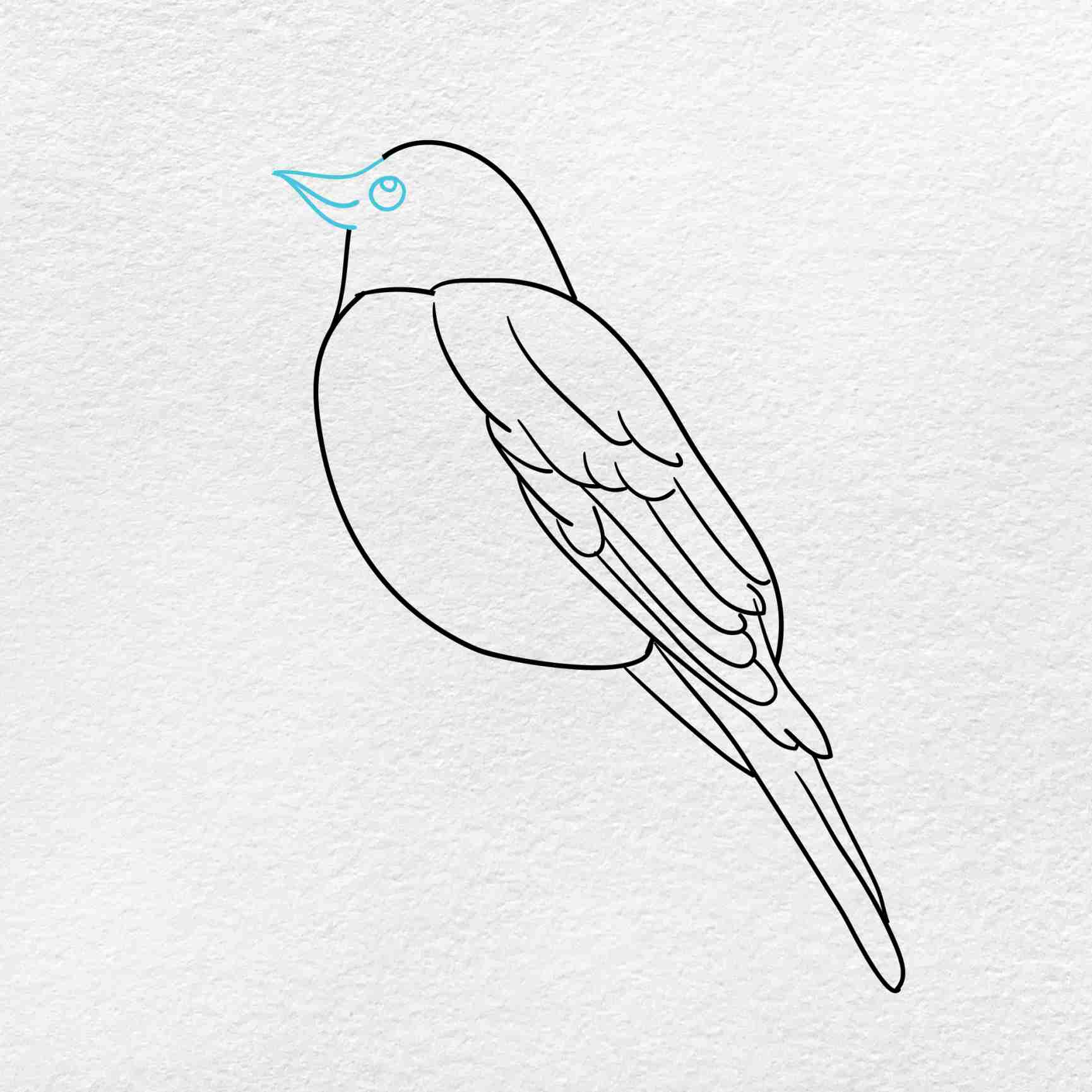 How To Draw A Robin: Step 4