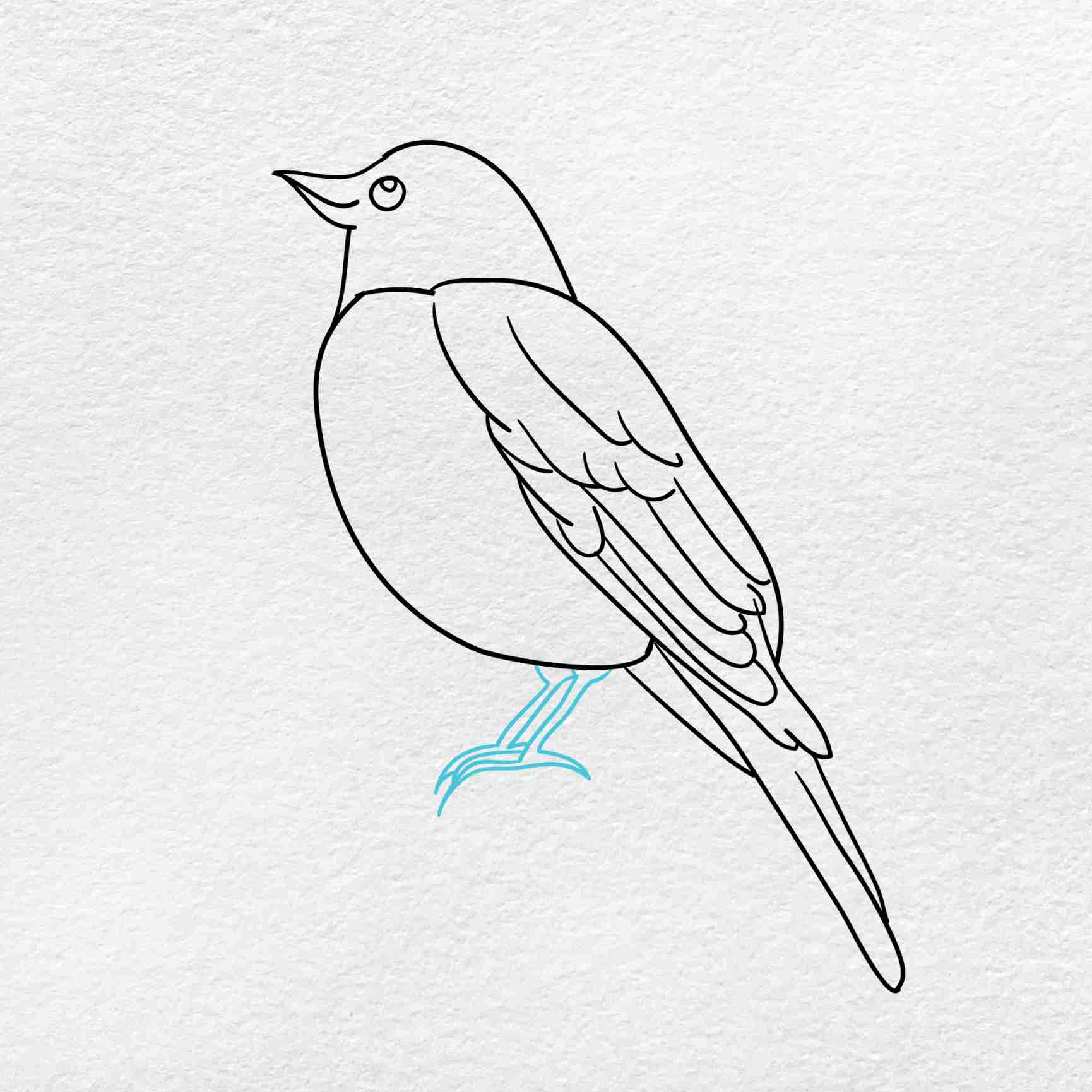 How To Draw A Robin: Step 5