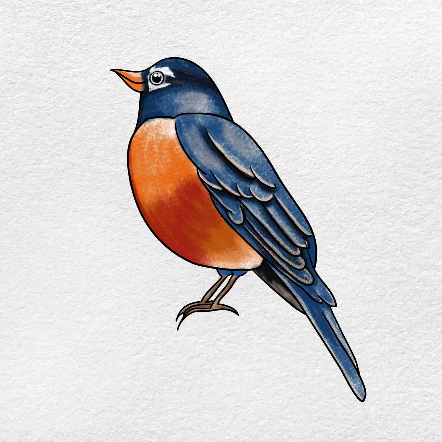 How To Draw A Robin: Step 6