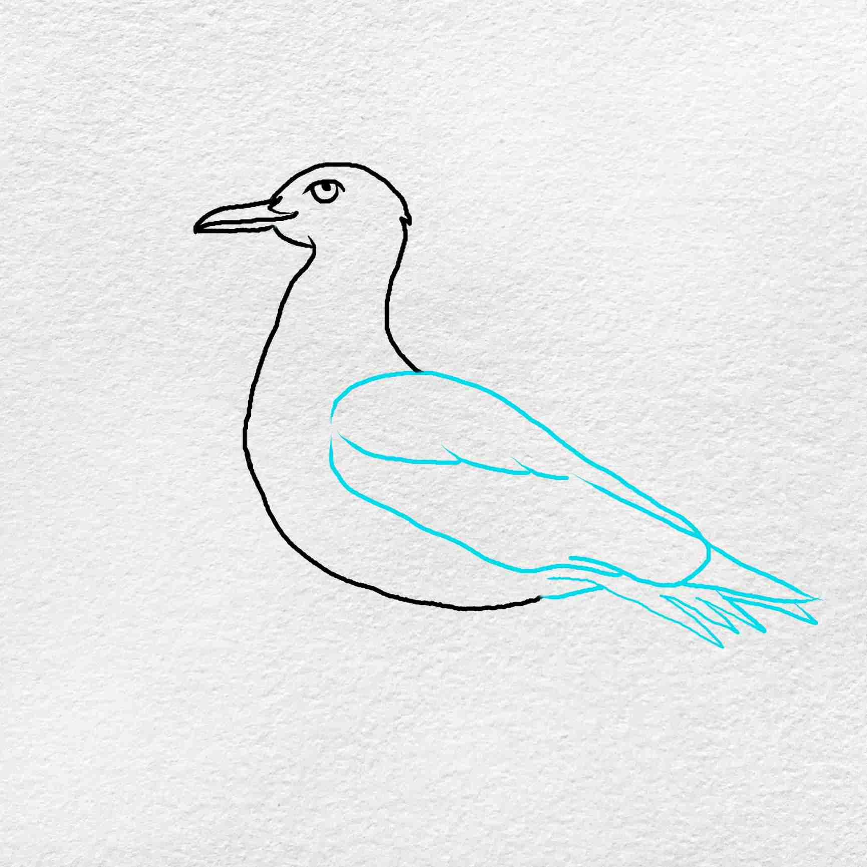 How To Draw A Seagull: Step 4