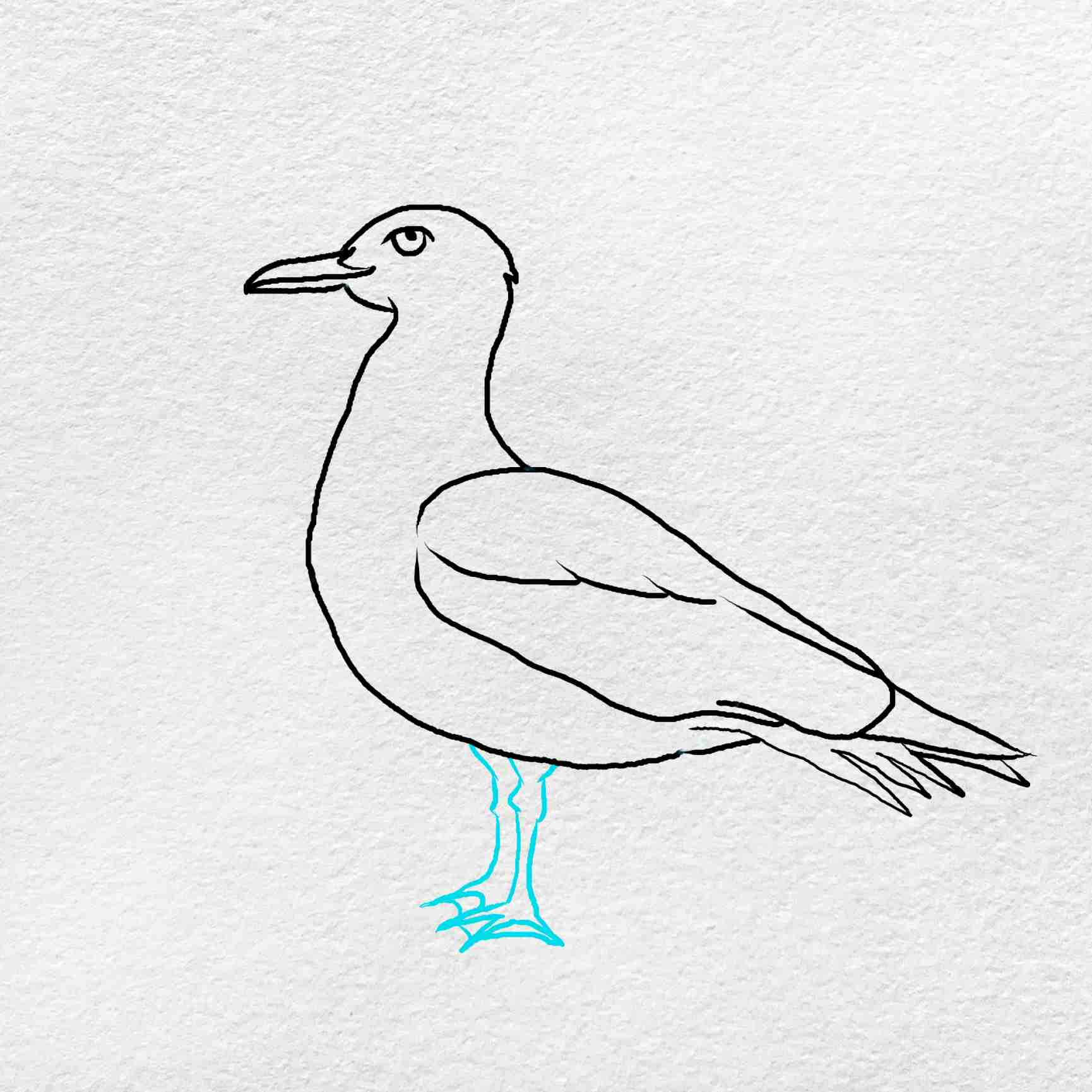 How To Draw A Seagull: Step 5