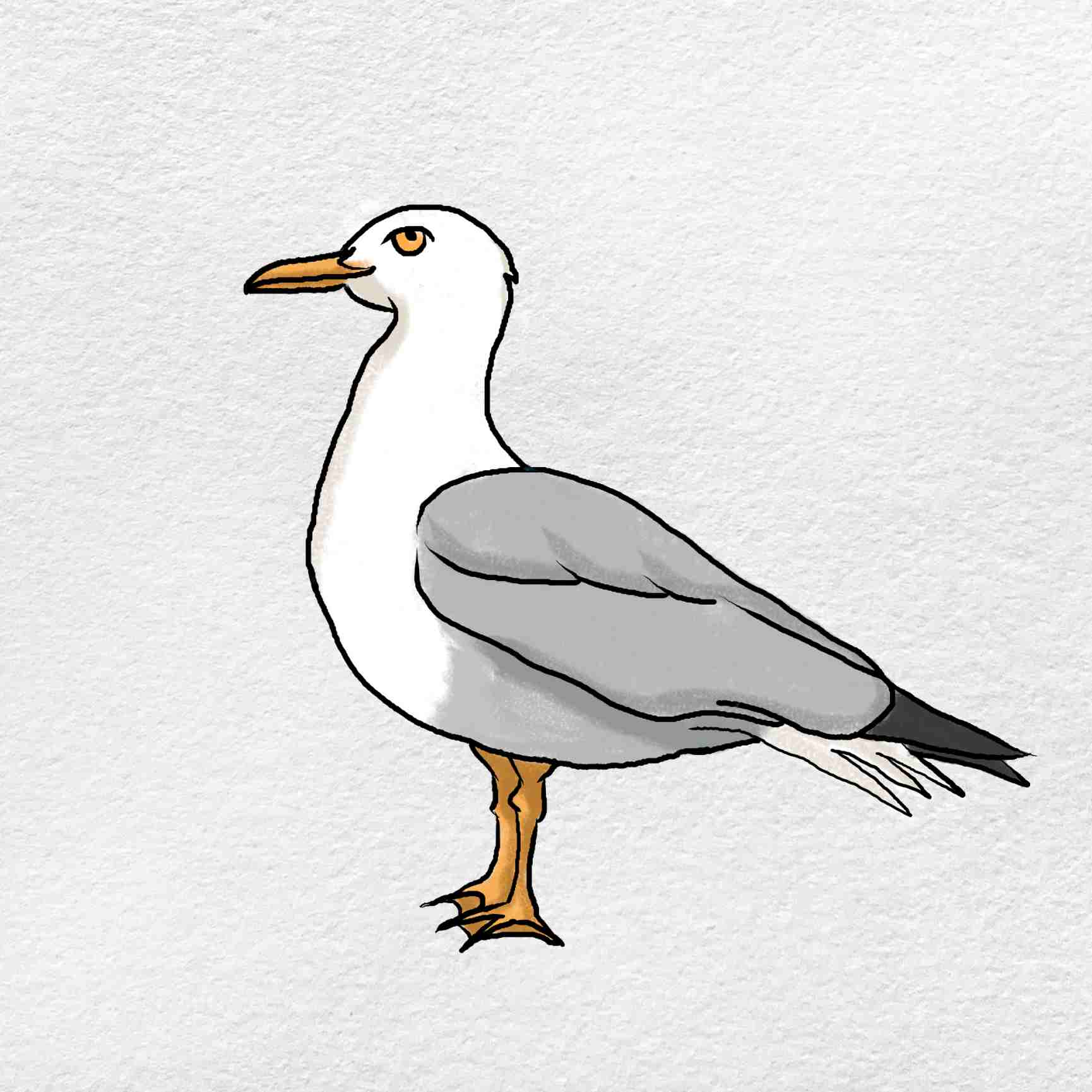How To Draw A Seagull: Step 6
