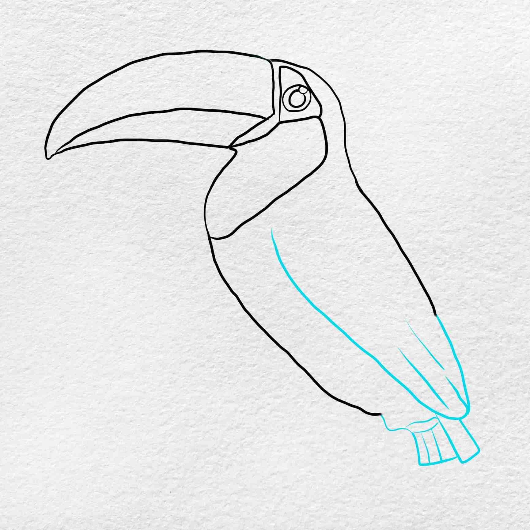 How To Draw A Toucan: Step 4