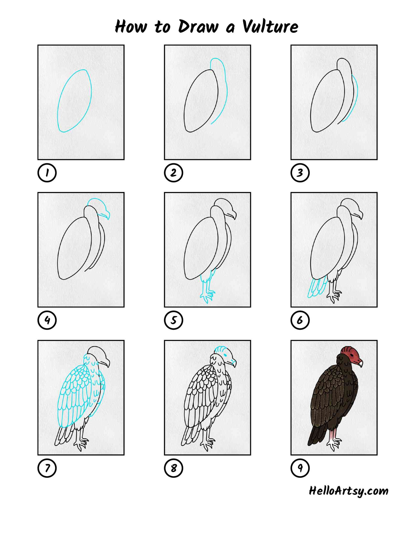 How To Draw A Vulture: All Steps
