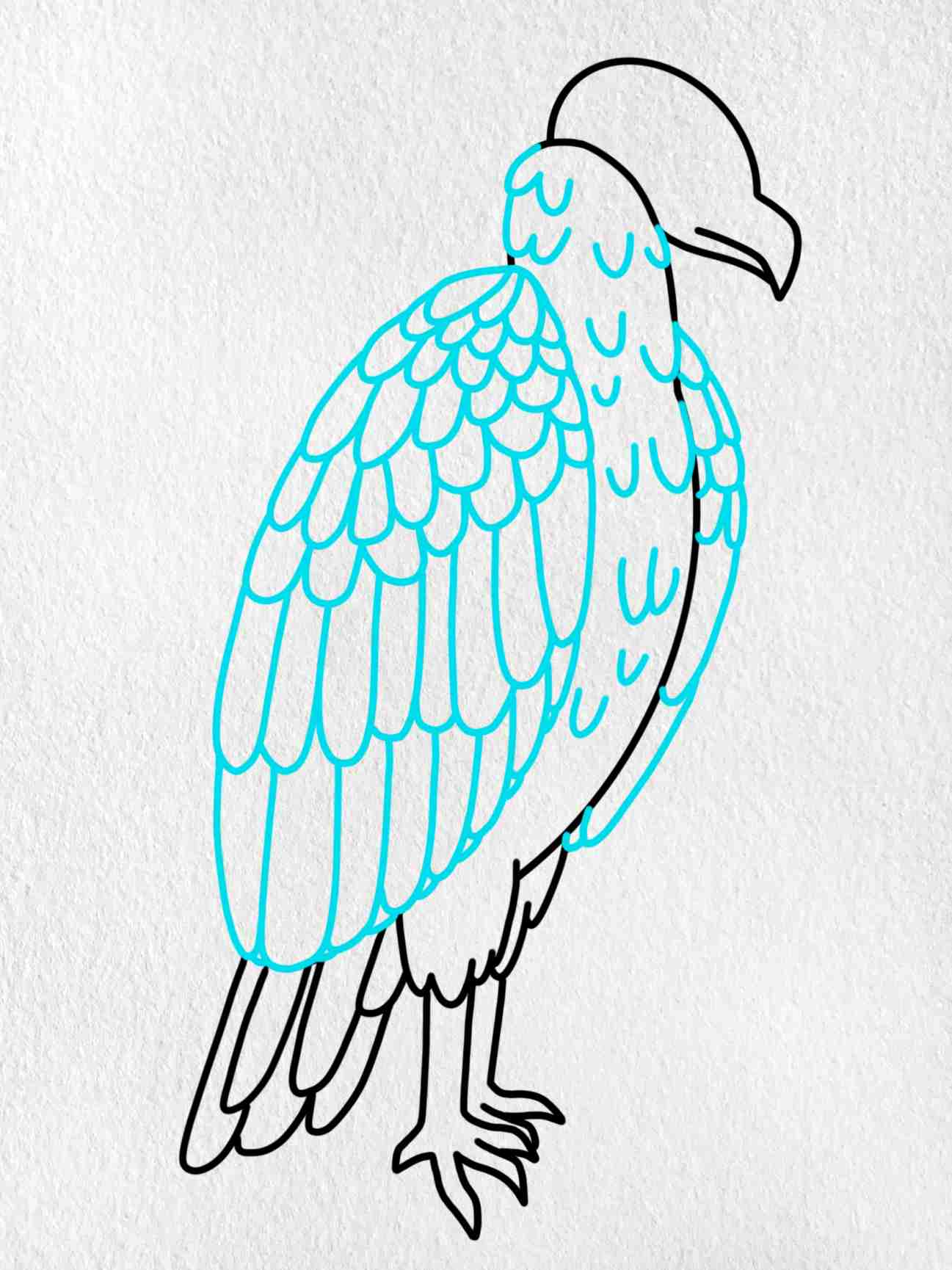 How To Draw A Vulture: Step 7