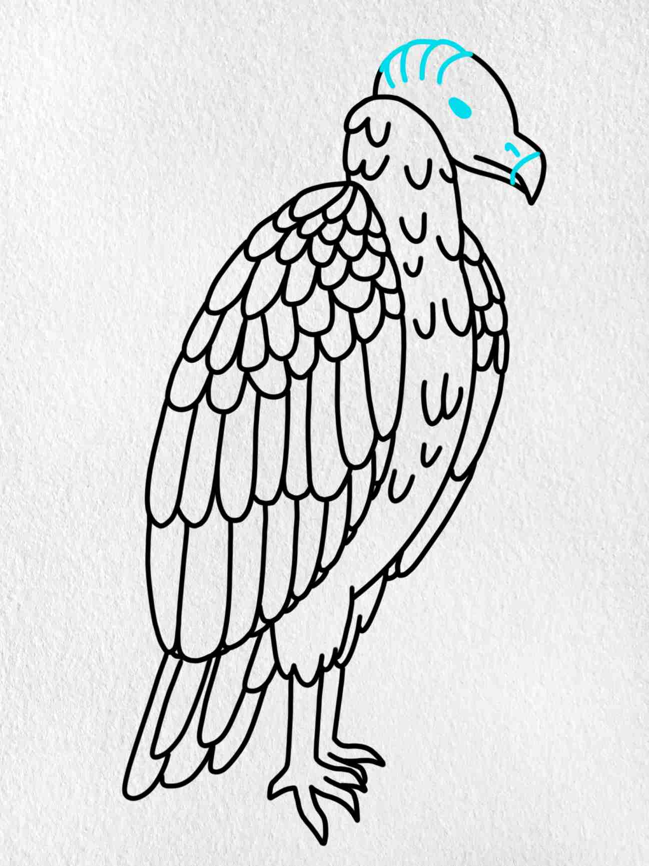 How To Draw A Vulture: Step 8