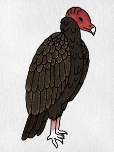 How To Draw A Vulture: Step 9