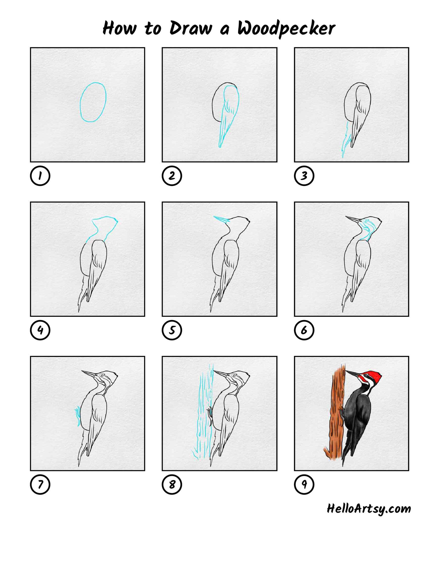 How To Draw A Woodpecker: All Steps