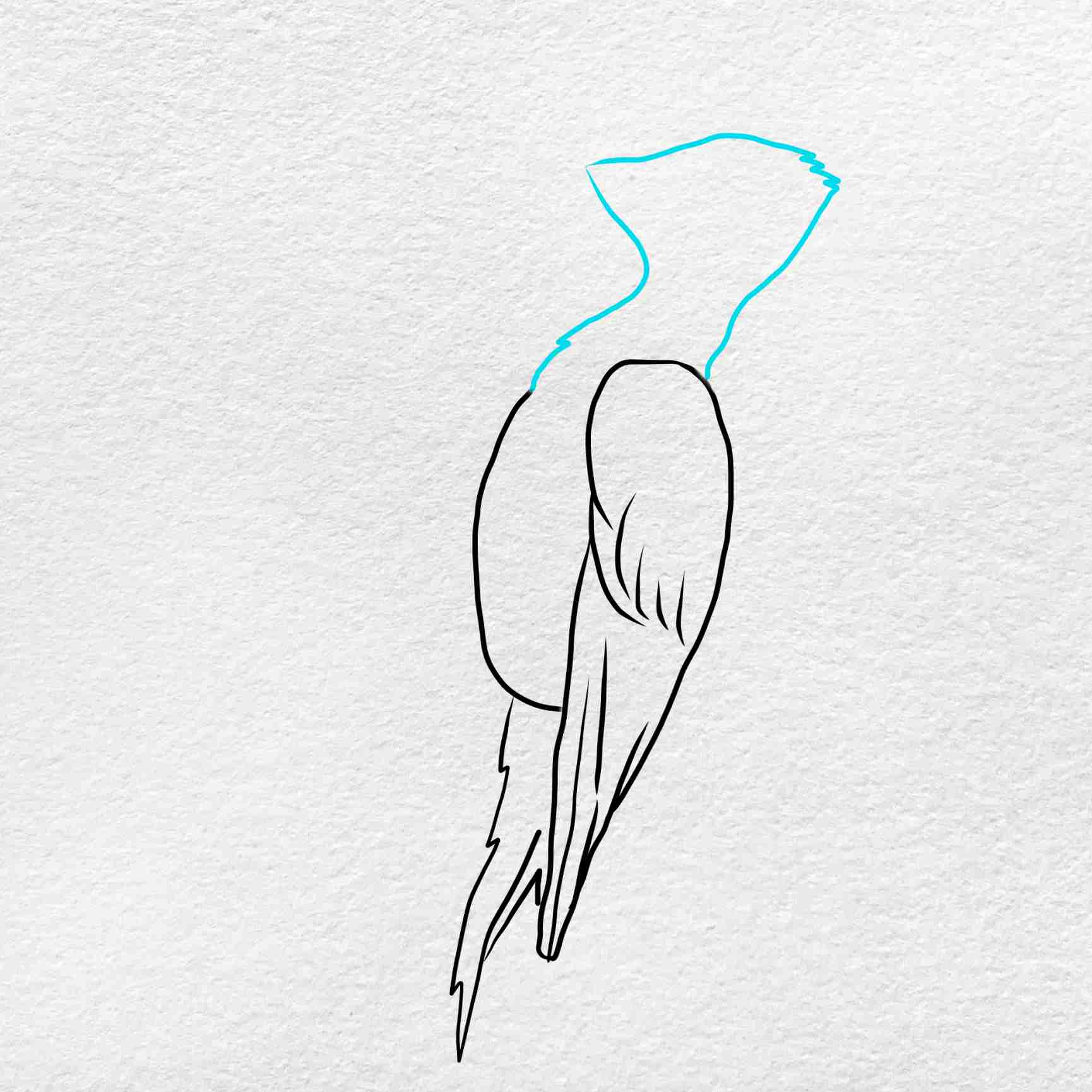 How To Draw A Woodpecker: Step 4