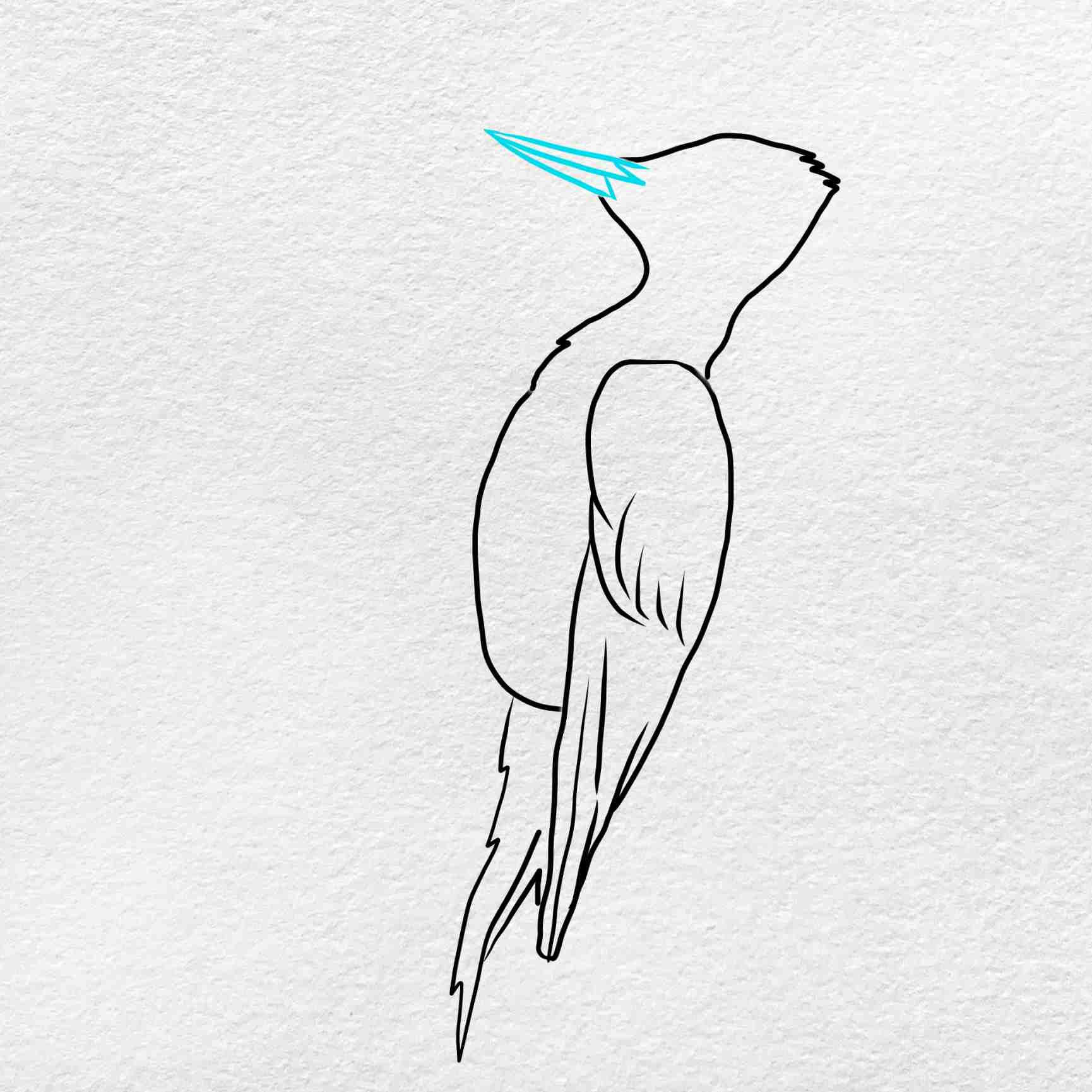 How To Draw A Woodpecker: Step 5