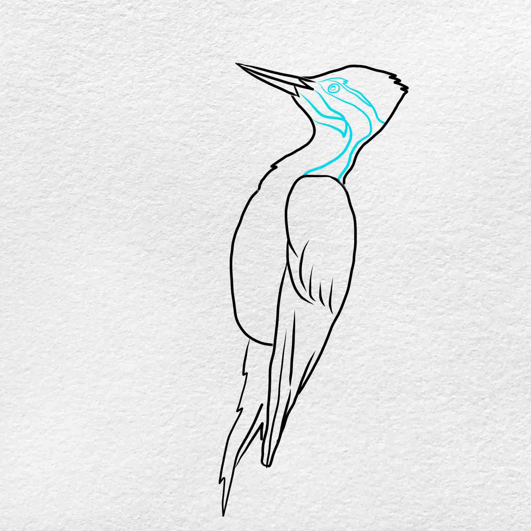 How To Draw A Woodpecker: Step 6