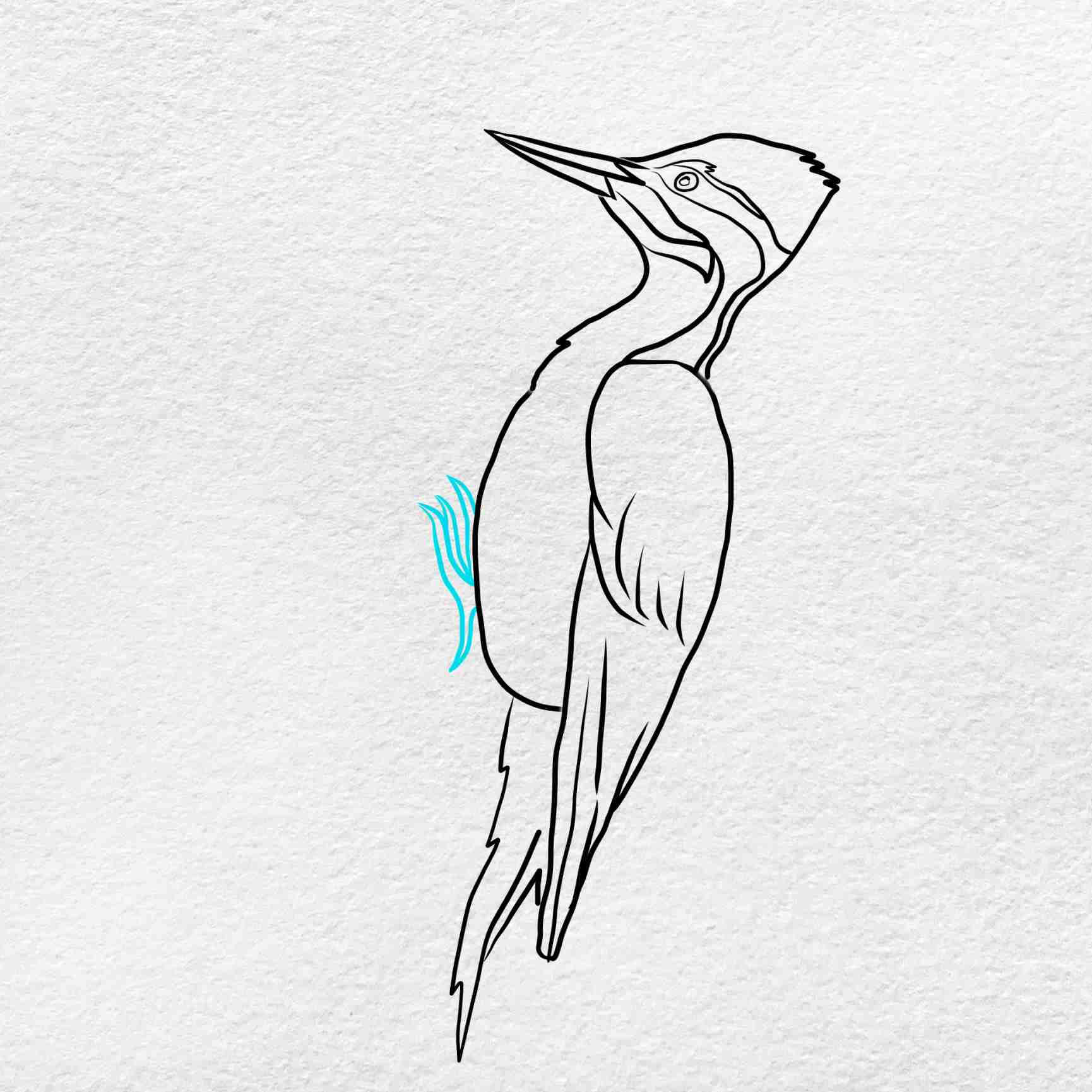 How To Draw A Woodpecker: Step 7