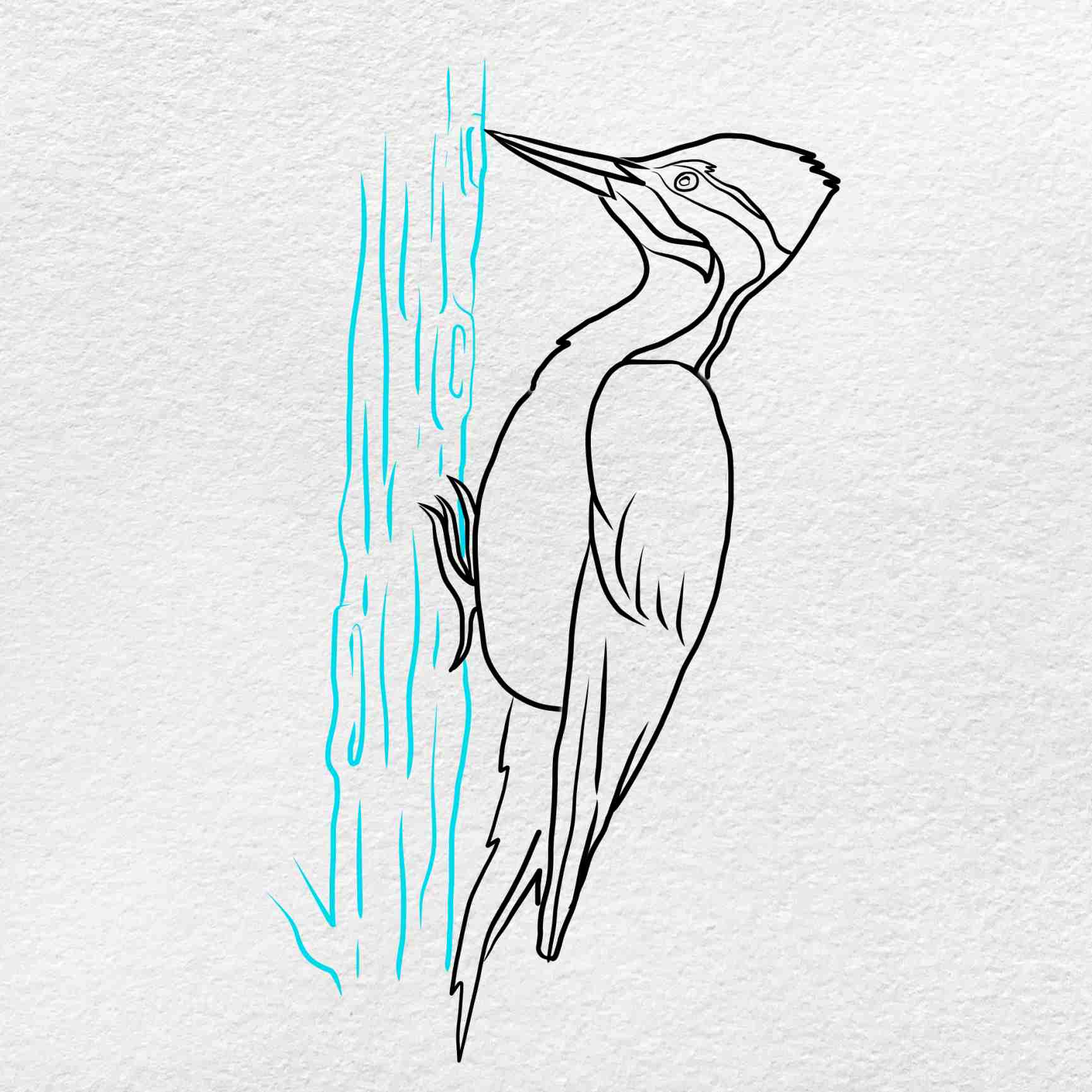 How To Draw A Woodpecker: Step 8