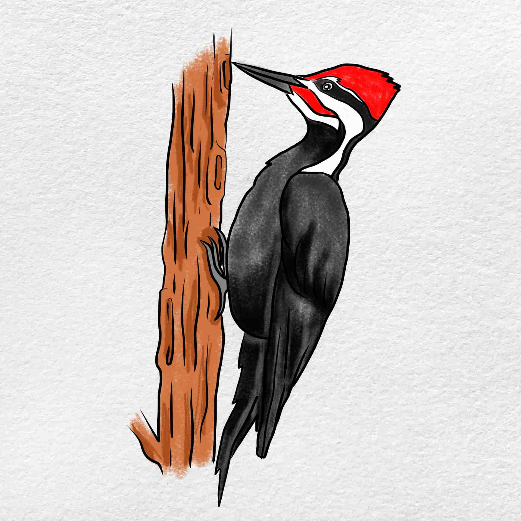 How To Draw A Woodpecker: Step 9