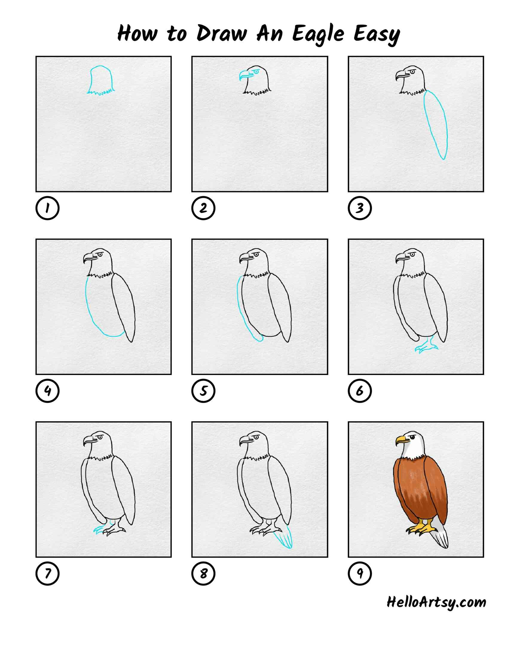 How To Draw An Eagle Easy: All Steps