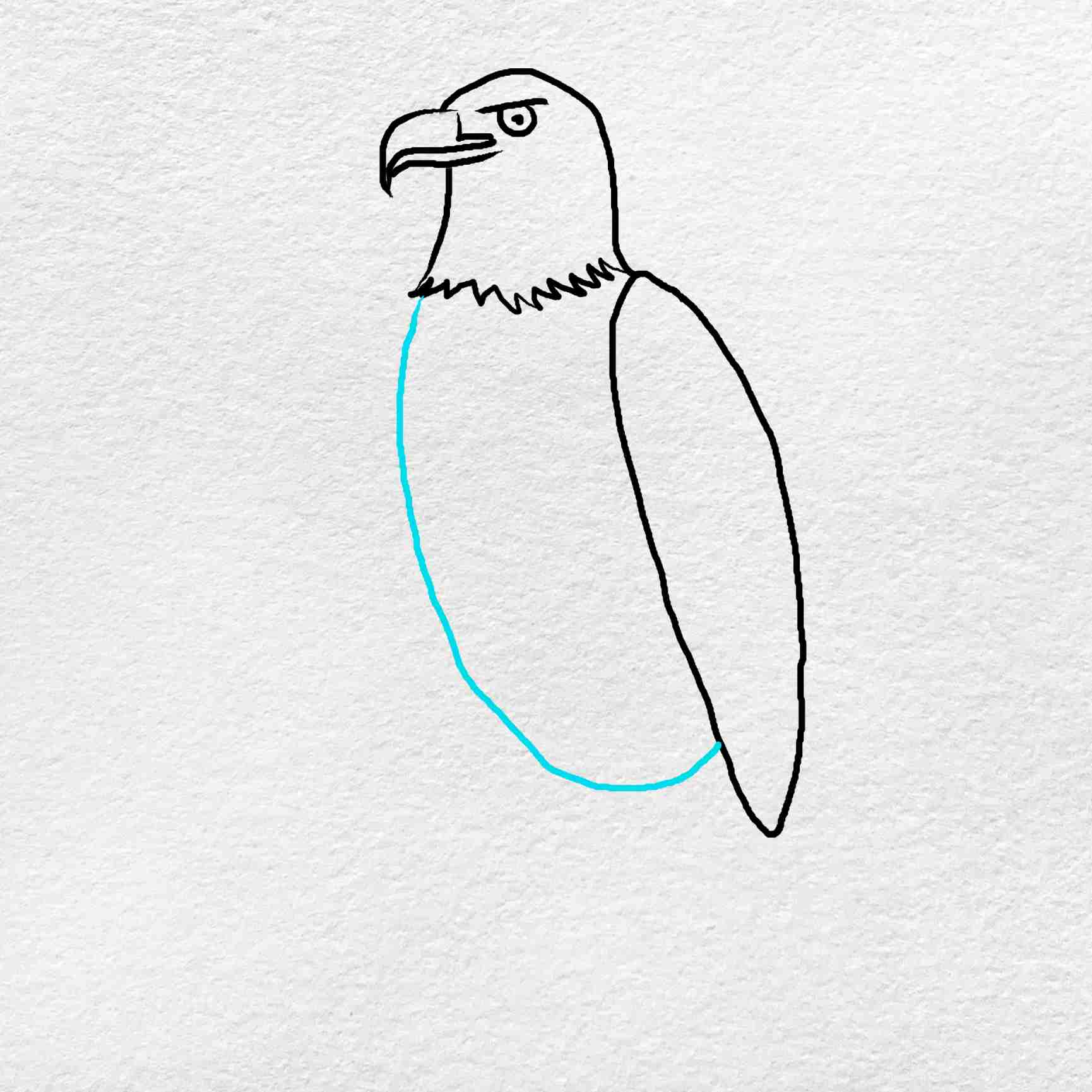 How To Draw An Eagle Easy: Step 4