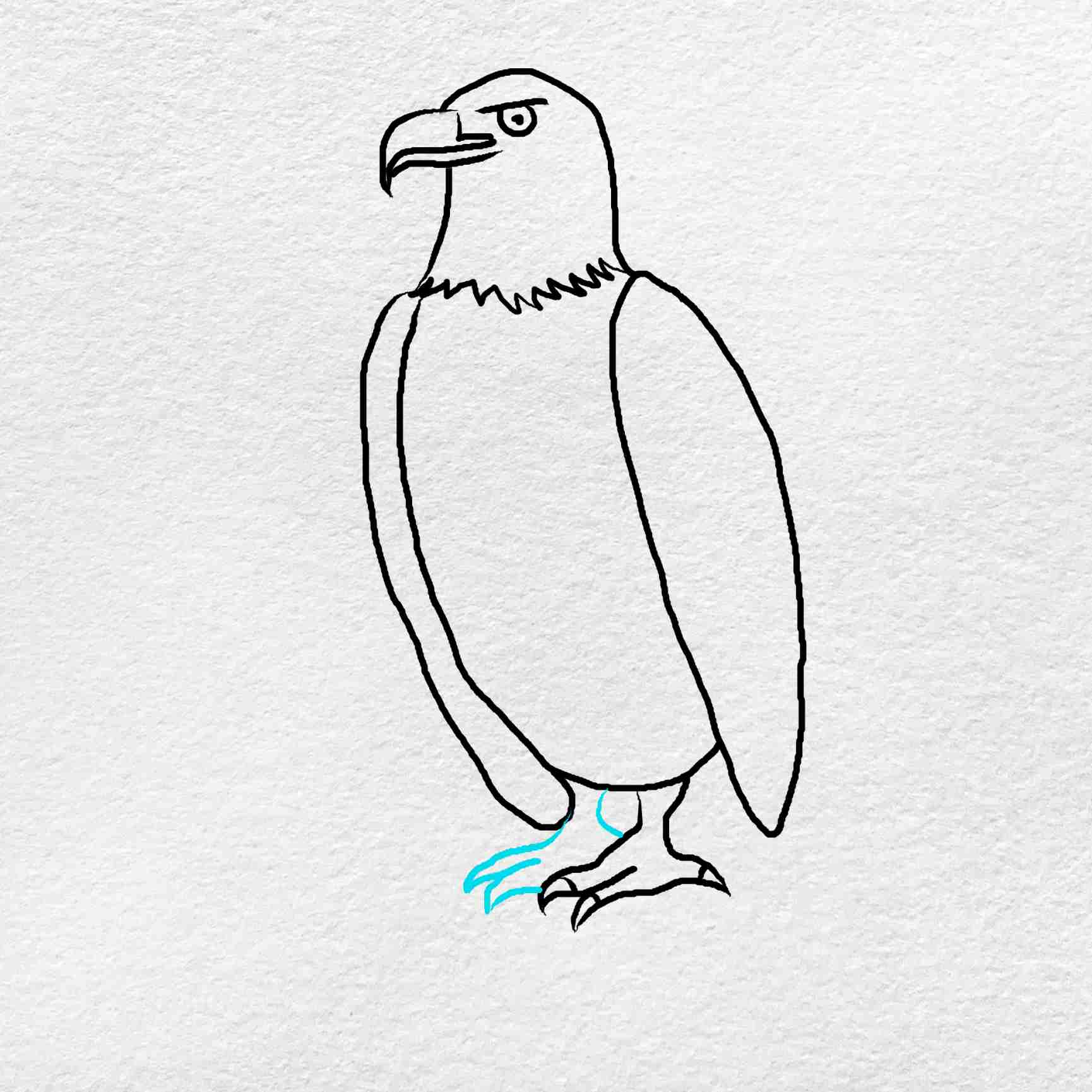 How To Draw An Eagle Easy: Step 7