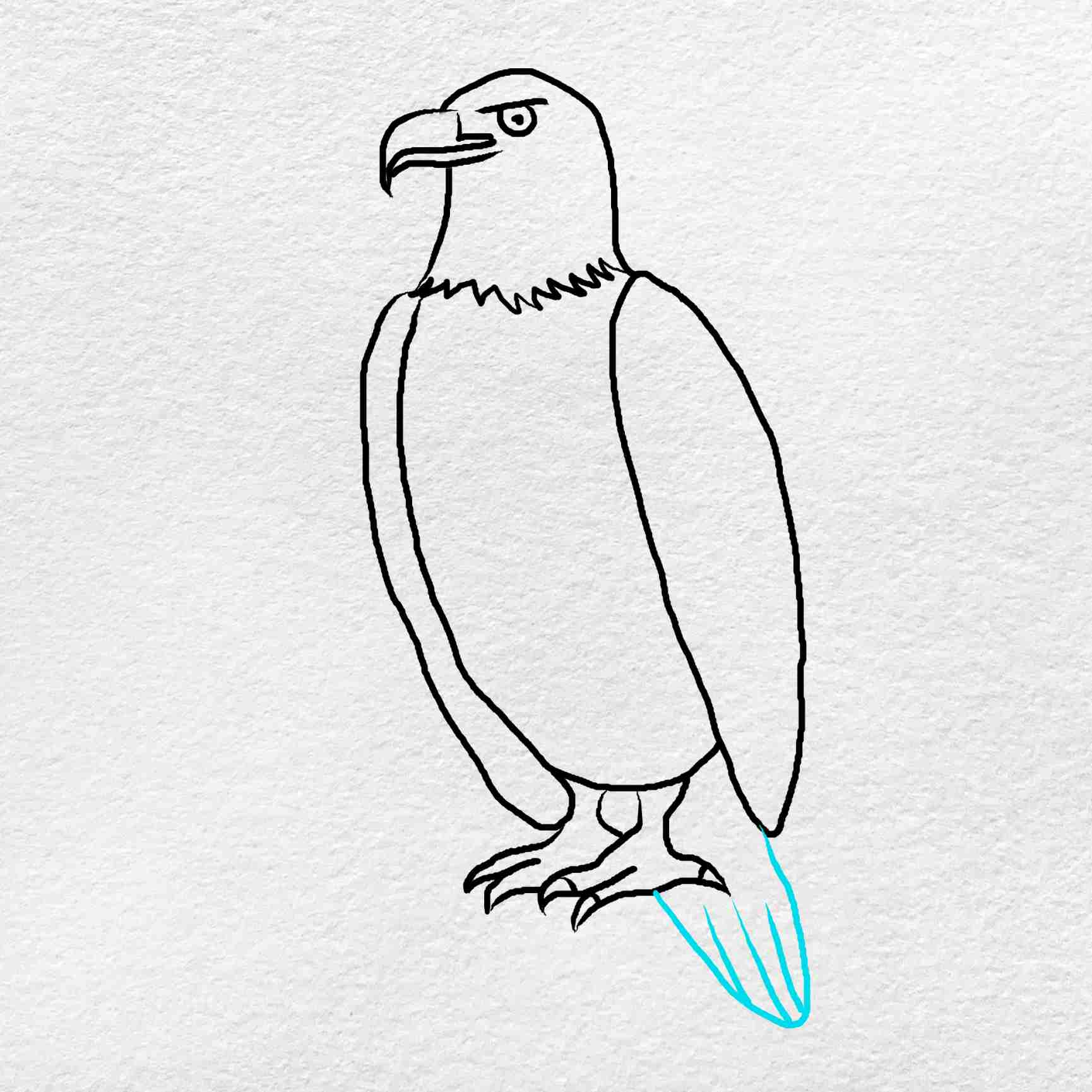 How To Draw An Eagle Easy: Step 8