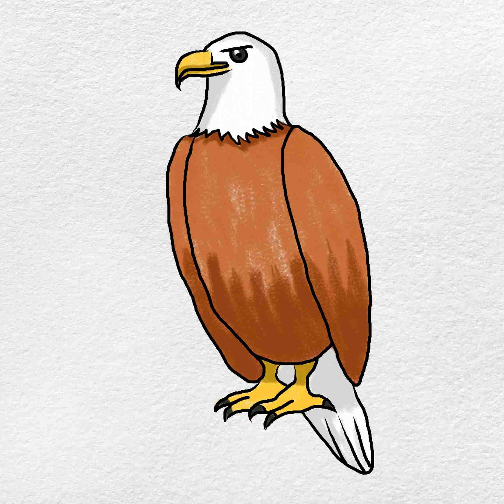 How To Draw An Eagle Easy: Step 9