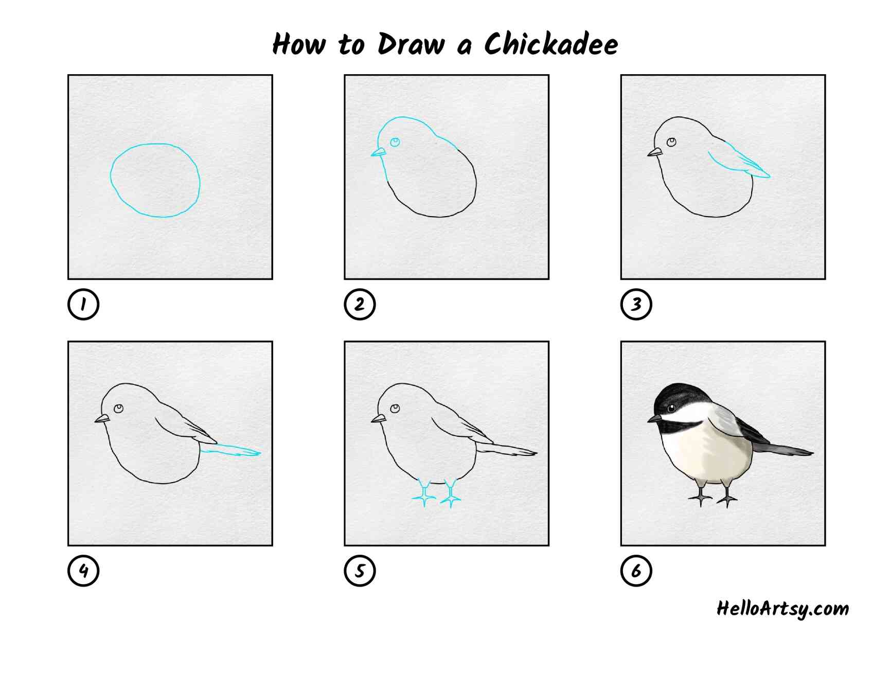 How To Draw Chickadee: All Steps