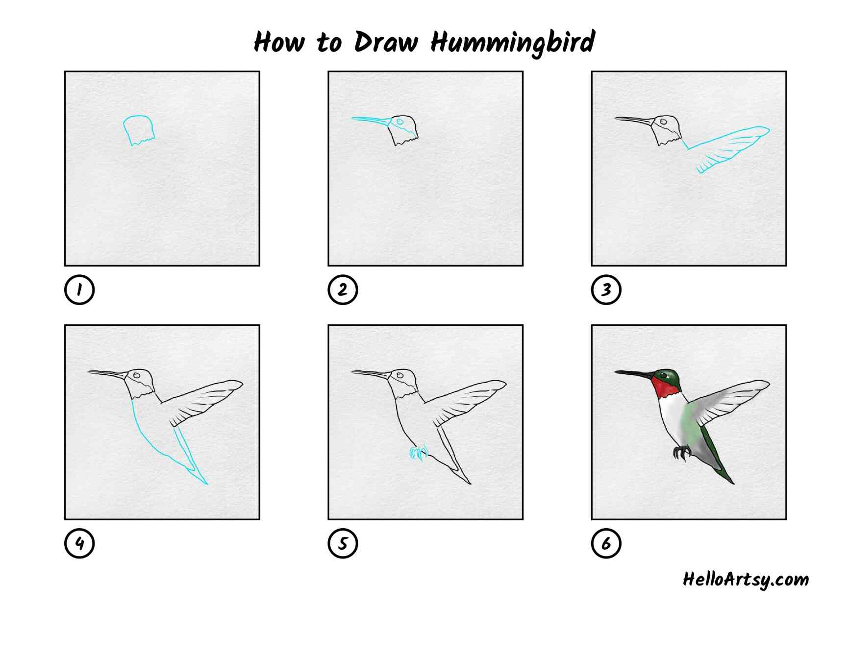 How To Draw Hummingbird: All Steps