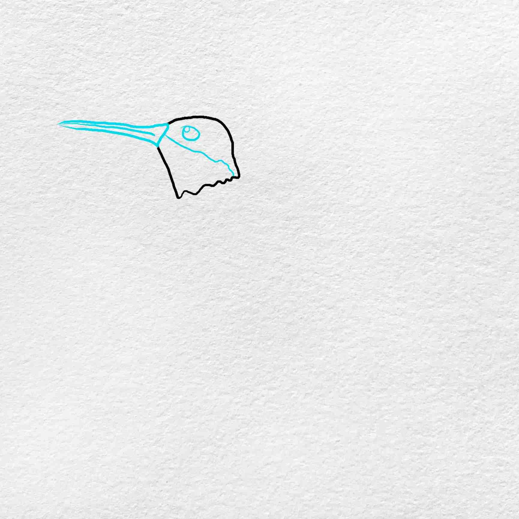 How To Draw Hummingbird: Step 2