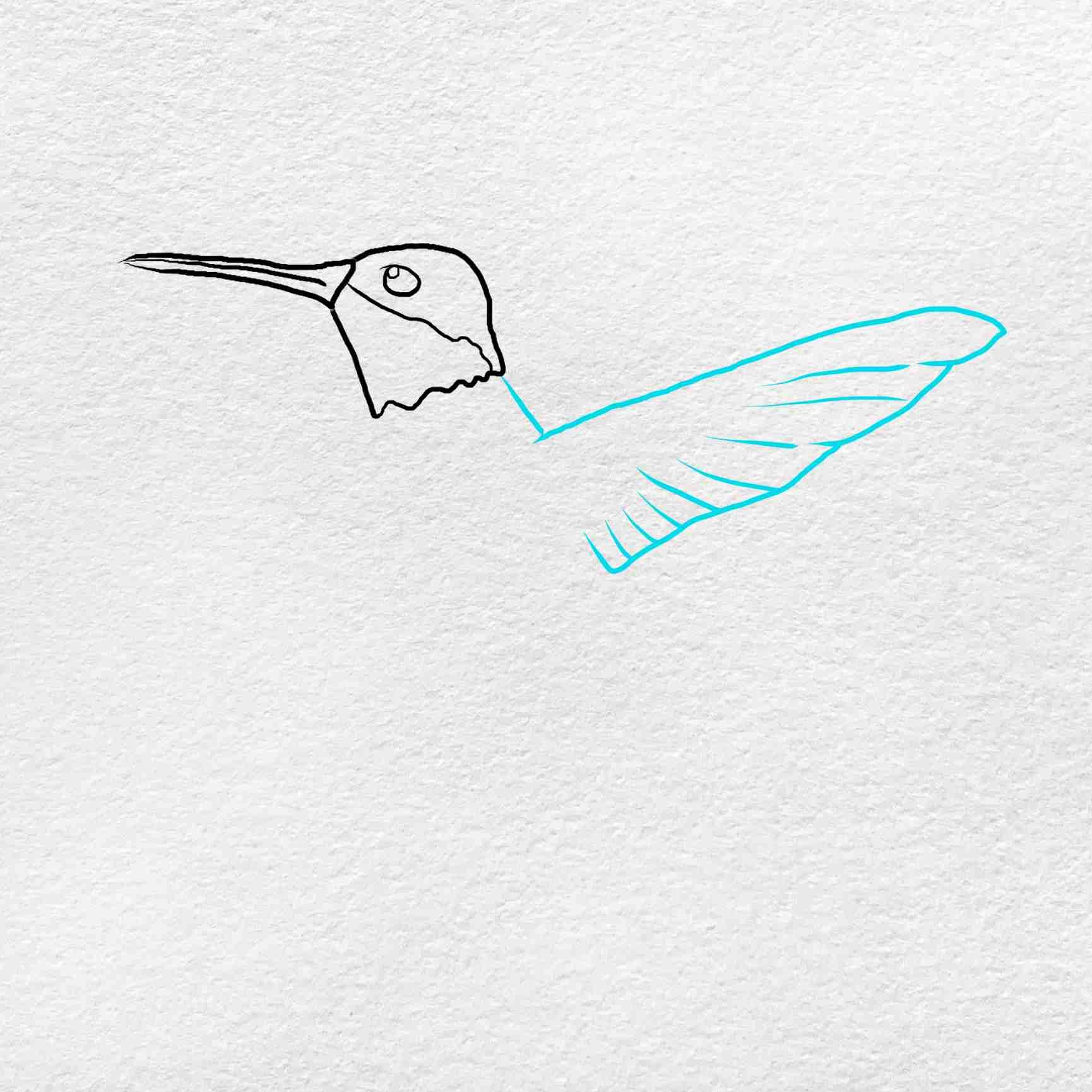 How To Draw Hummingbird: Step 3
