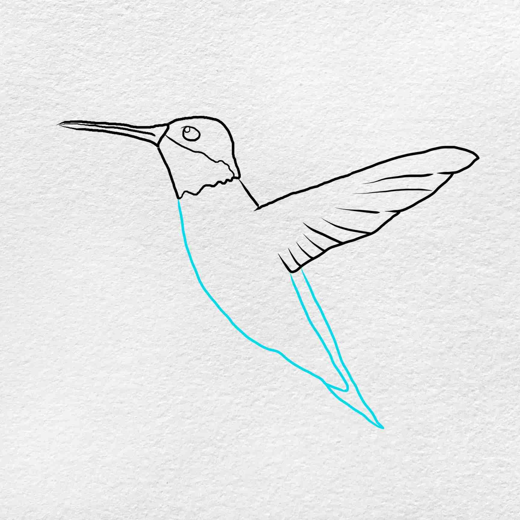 How To Draw Hummingbird: Step 4