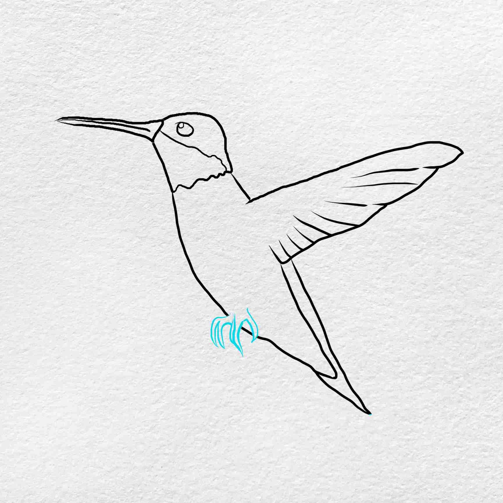 How To Draw Hummingbird: Step 5