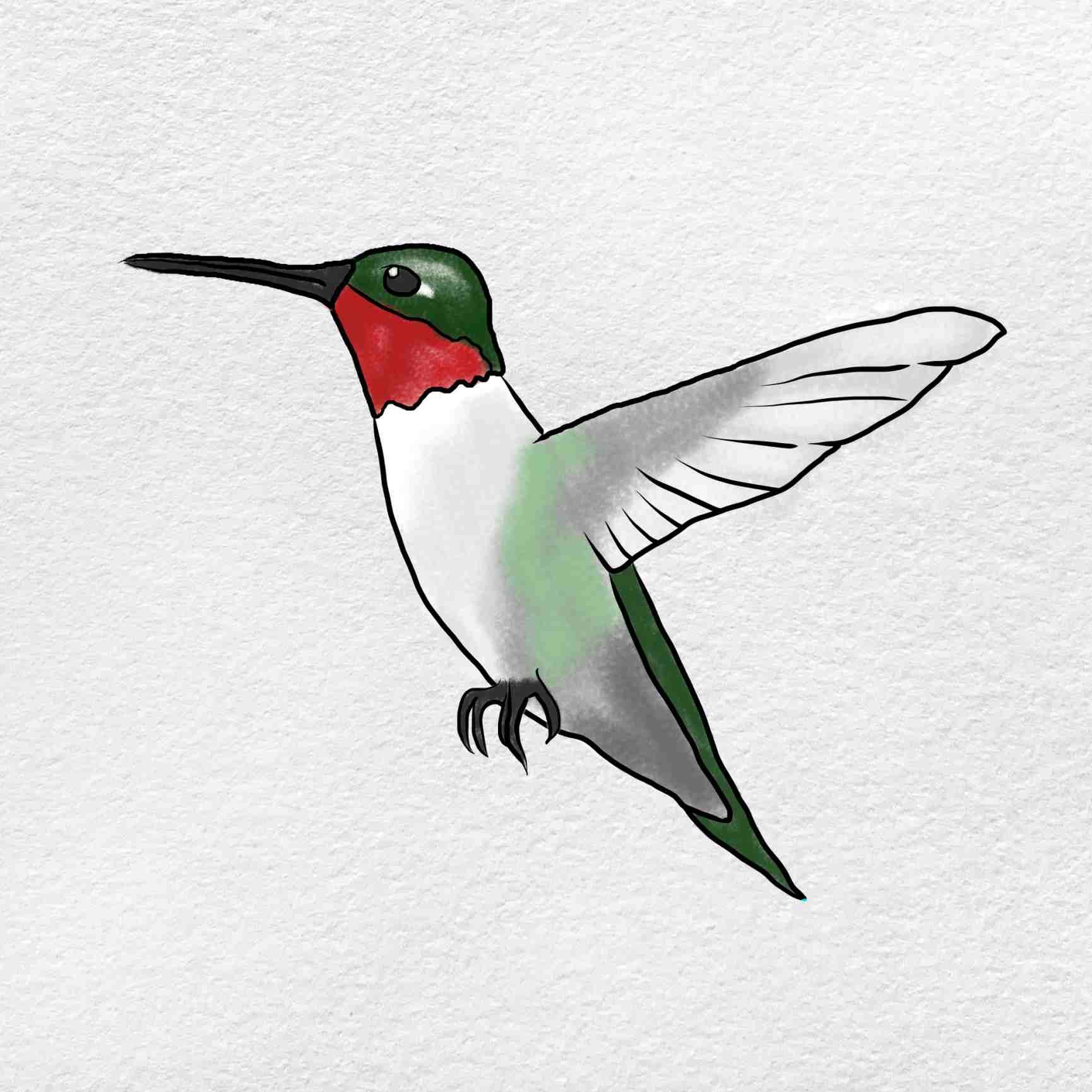 How To Draw Hummingbird: Step 6