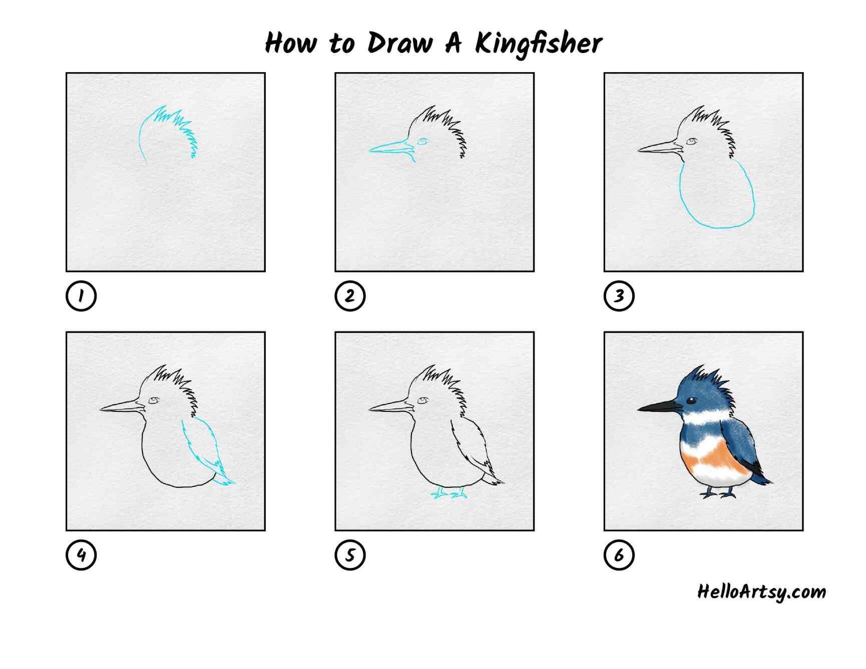 How To Draw Kingfisher: All Steps