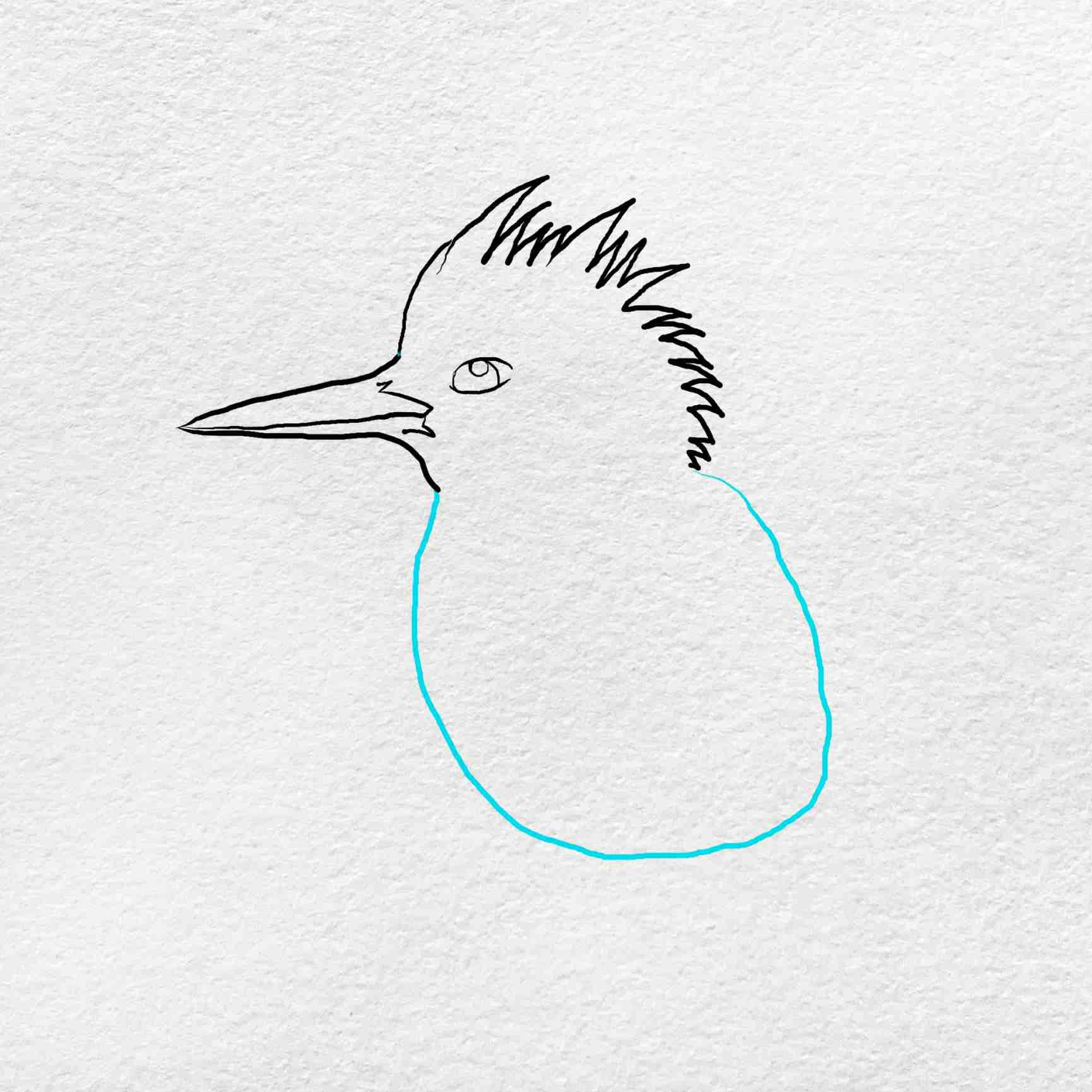 How To Draw Kingfisher: Step 3
