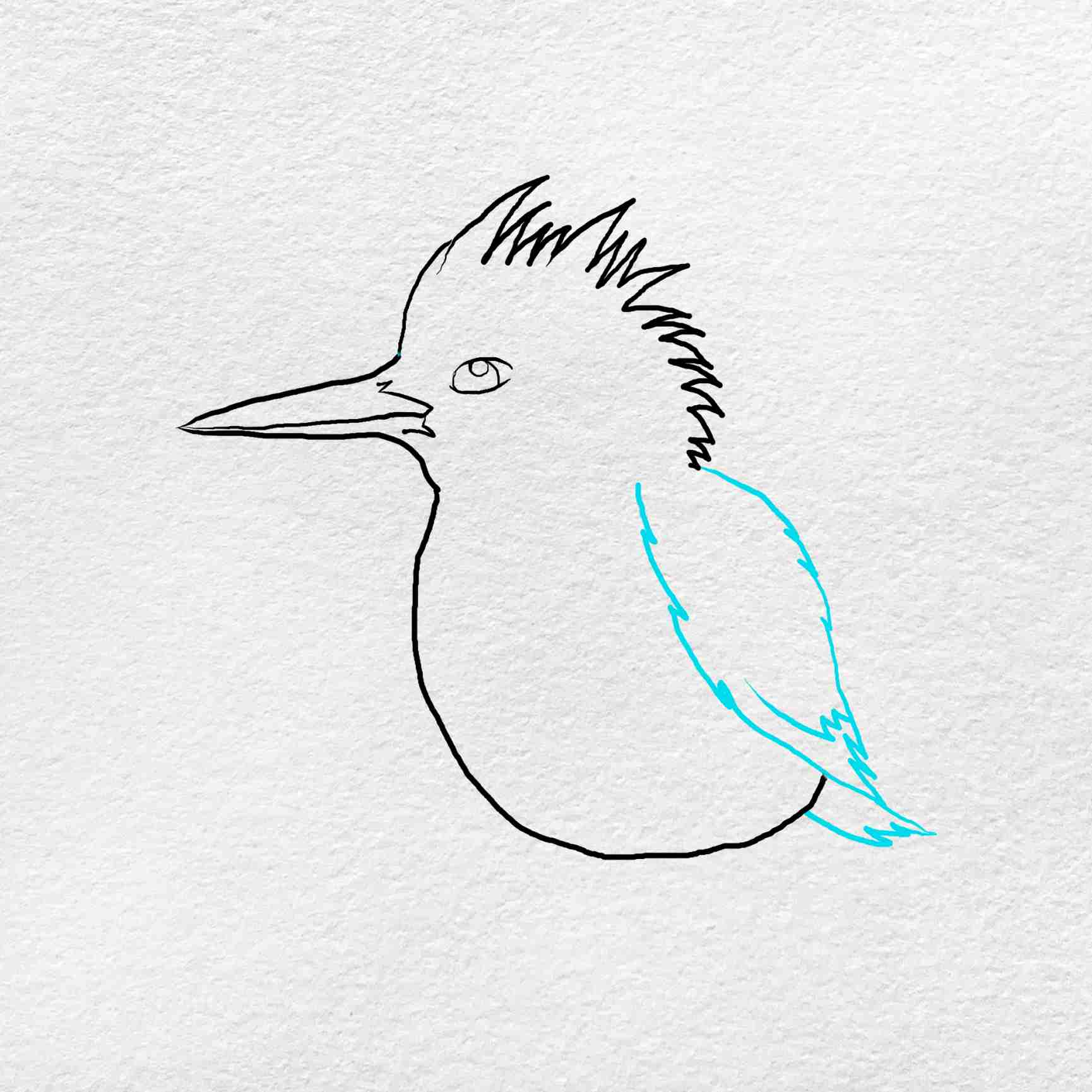 How To Draw Kingfisher: Step 4
