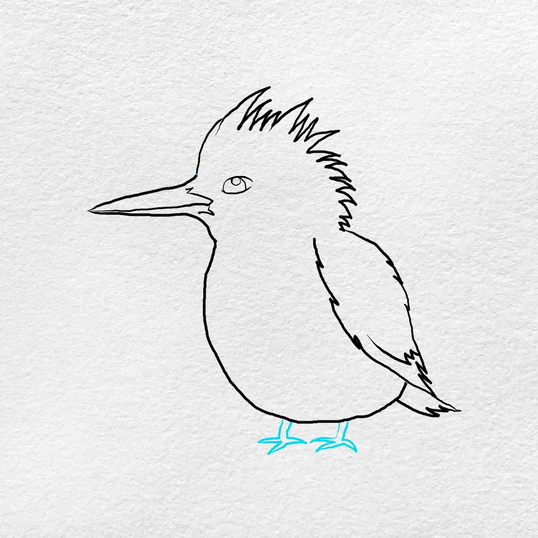 How To Draw Kingfisher: Step 5