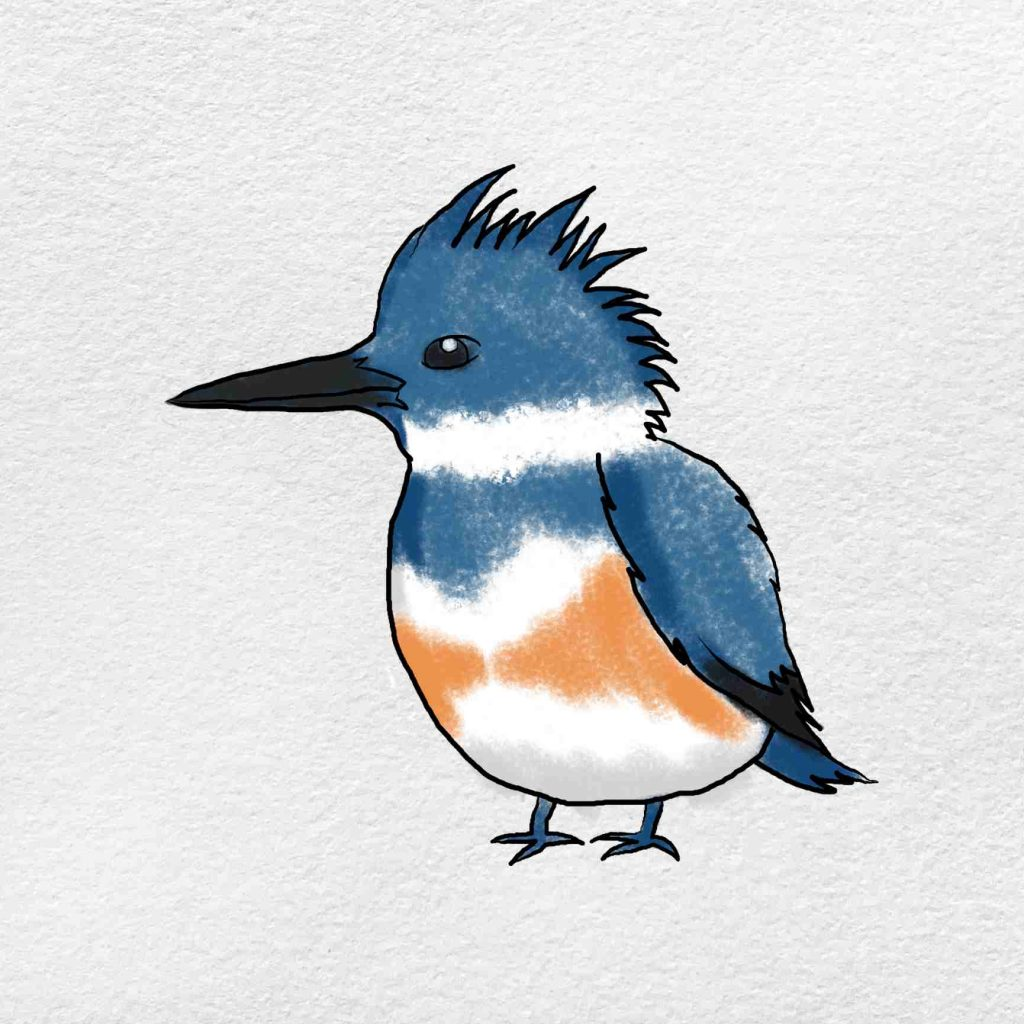 How To Draw Kingfisher: Step 6