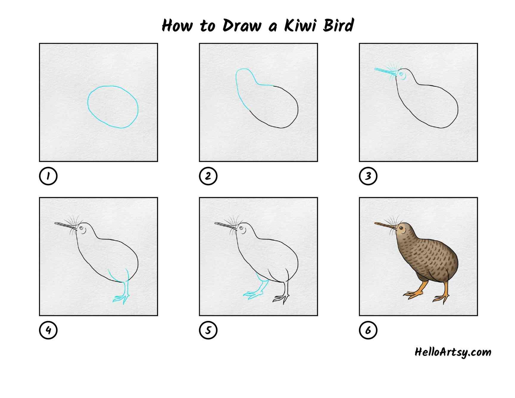 How To Draw Kiwi Bird: All Steps