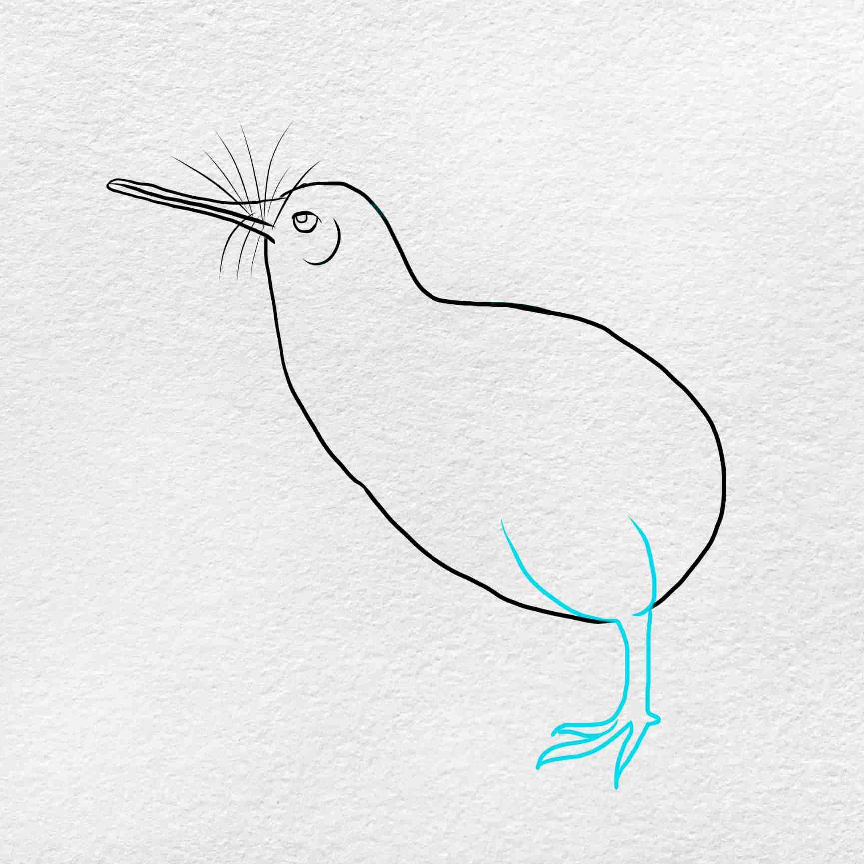 How To Draw Kiwi Bird: Step 4