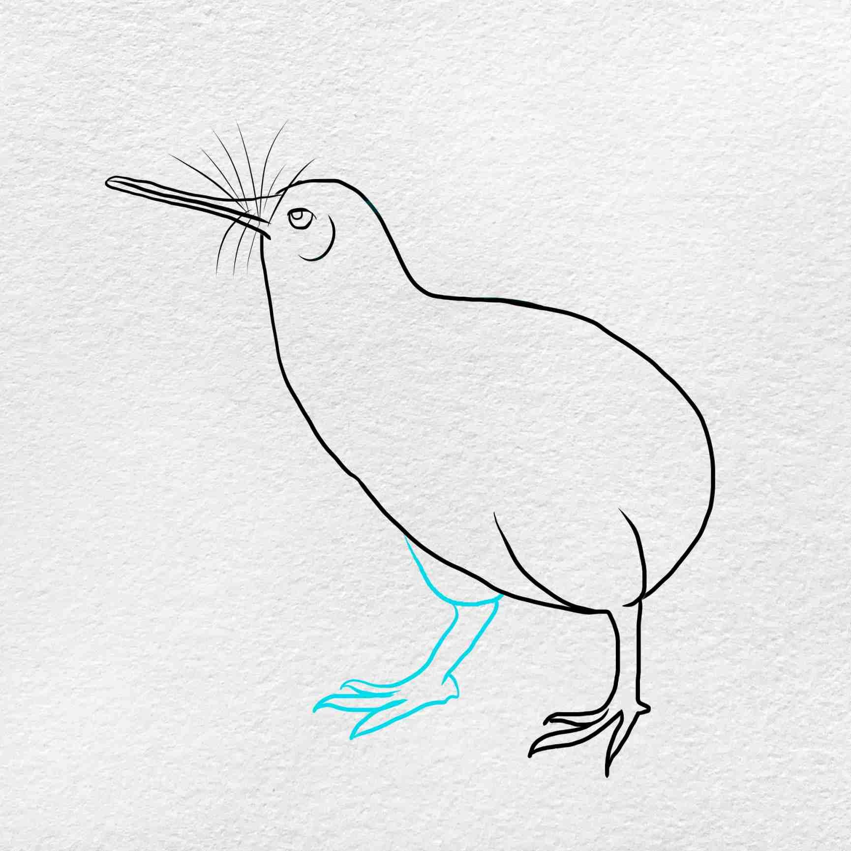 How To Draw Kiwi Bird: Step 5
