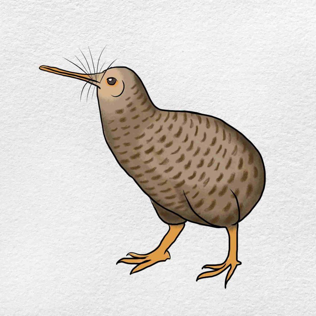 How To Draw Kiwi Bird: Step 6